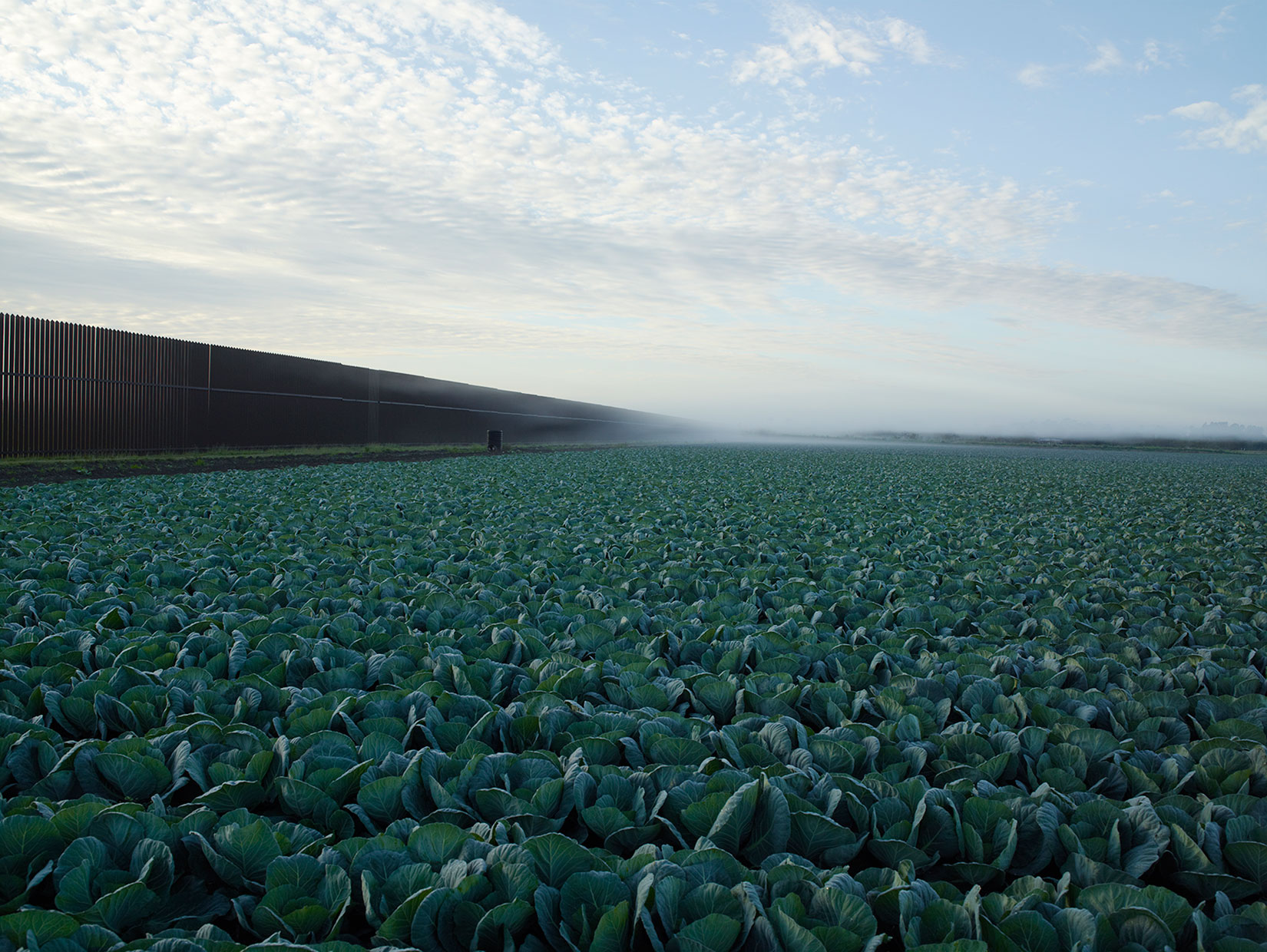 Border Cantos, Amon Carter Museum, Texas: Oct. 15 - Dec. 31                               (Caption: Cabbage crop and wall, Brownsville, Texas, 2015)