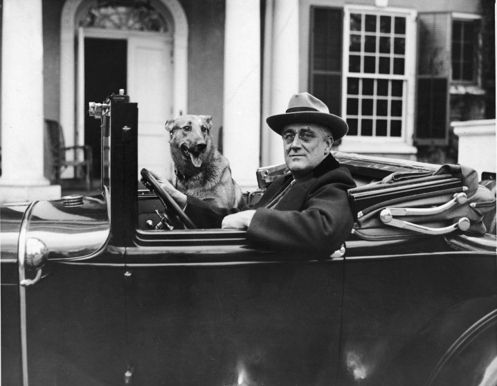 Franklin Delano Roosevelt sits behind the wheel of his car with his German Shepherd, Major, outside of his home in Hyde Park, New York, in the mid 1930's.