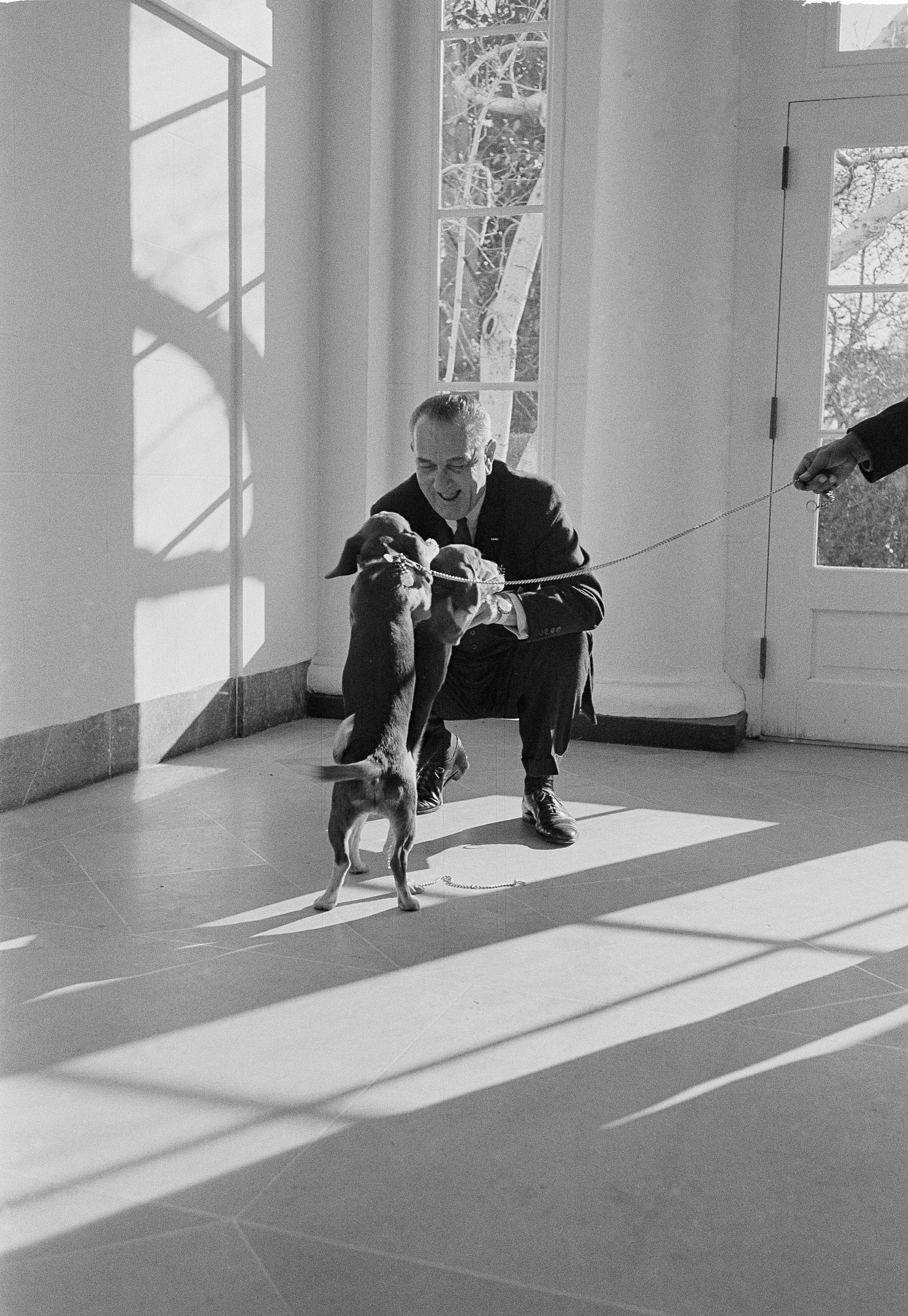 Lyndon B. Johnson gets a lively greeting from his daughter Lucy's beagles, Him and Her, in a White House corridor, Dec. 21, 1963.