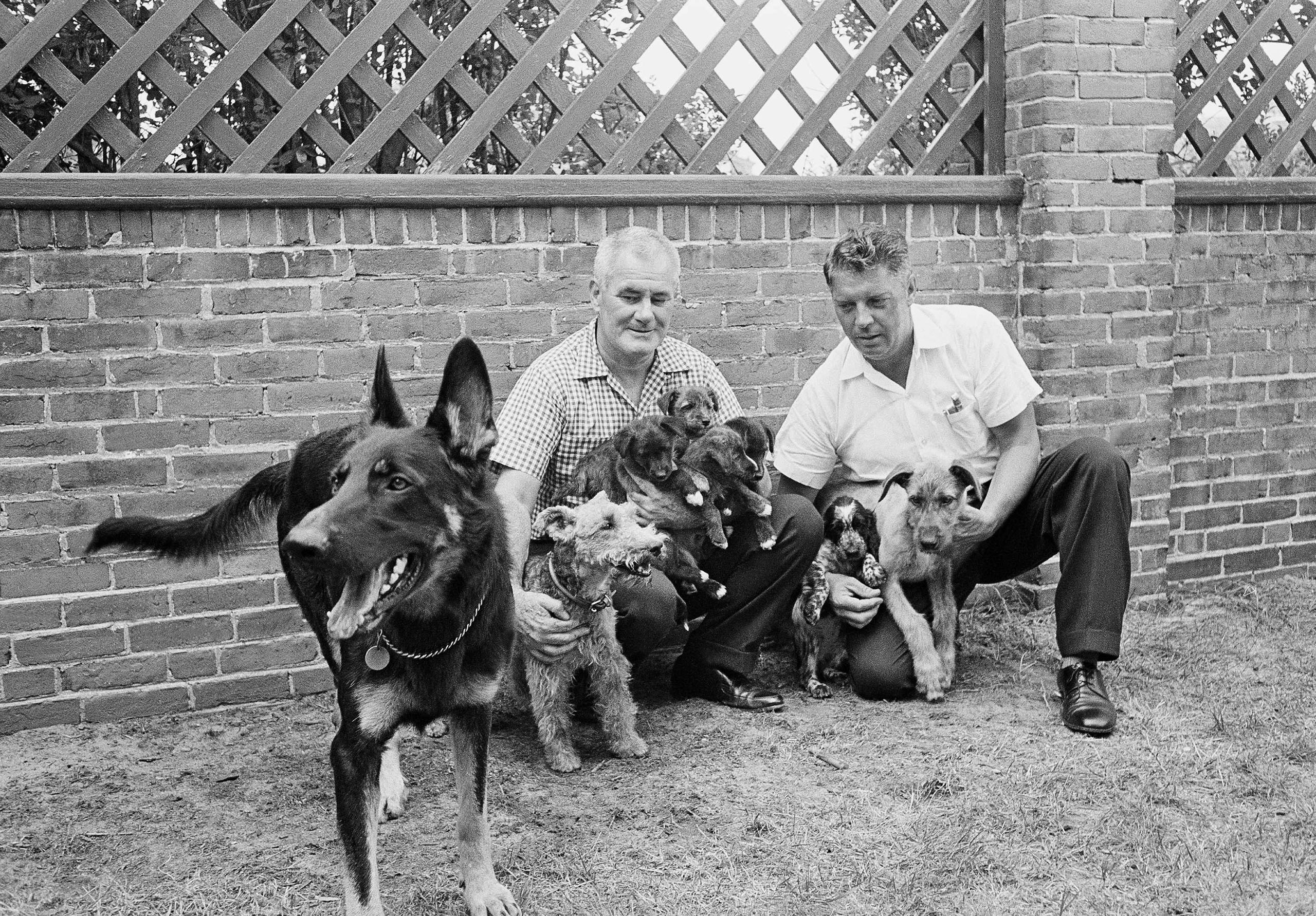 Clipper, a German Shepherd, supervises eight of the dogs of John F. Kennedy's household at Squaw Island, Hyannis Port, Massachusetts on Aug. 14, 1963. White House aide Traphes Bryant holds Charlie, a Welsh terrier and four of Charlie's puppies, Blackie, White Tip, Streaker and Butterfly. Capt. Cecil Stoughton, Army Signal Corps, holds a new arrival, a Cocker Spaniel named Shannon, and a yet unnamed Irish Wolfhound.   Still in Washington is Pushinka, the daughter of a Soviet space dog.