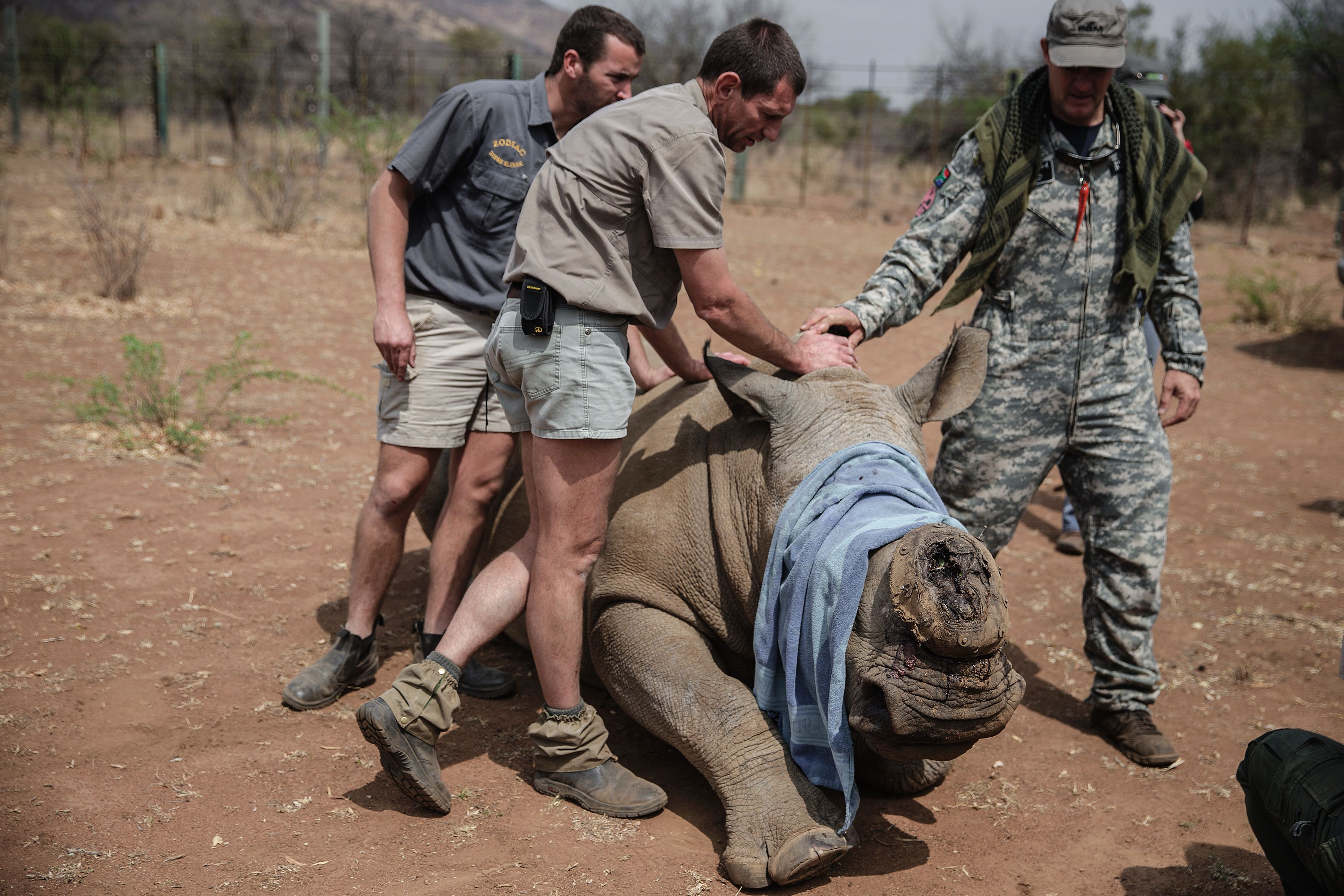 A veterinary from Saving the Survivors and RHINO911 crew attend to a previously wounded Rhino during an operation of RHINO911 Non Governamental Organization at the Pilanesberg National Park in the North West province, South Africa, on Sept. 19, 2016.