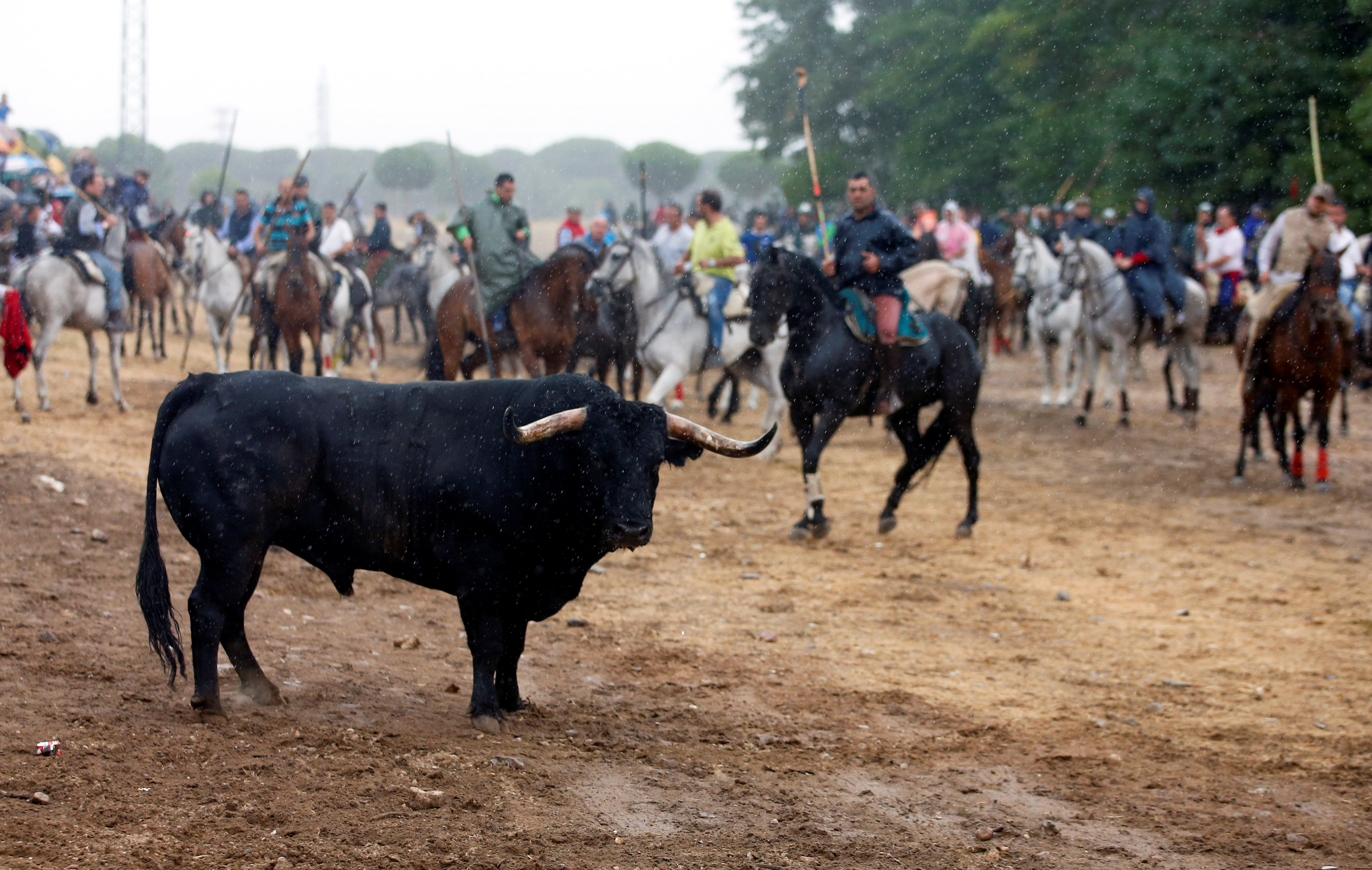 Clashes As Spanish Town Bans Bull Lancing At Annual Festival Time