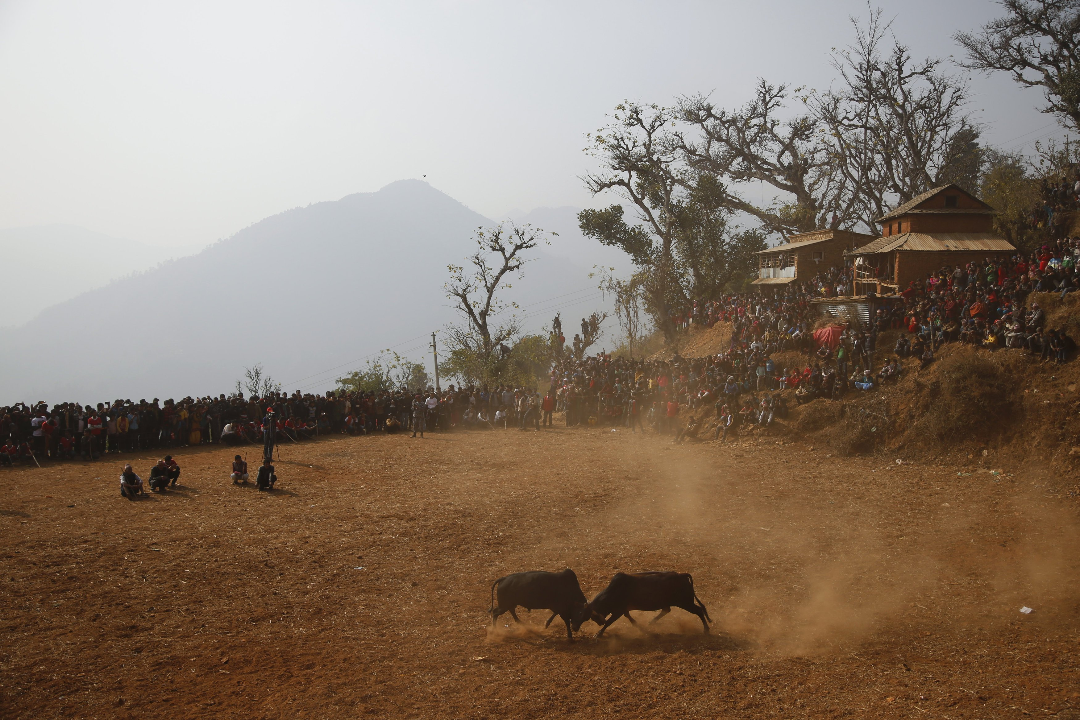 Villagers watch as bulls fight during the Maghesangranti festival at Talukachandani village in Nuwakot district near Kathmandu, Nepal, on Jan. 15, 2016.