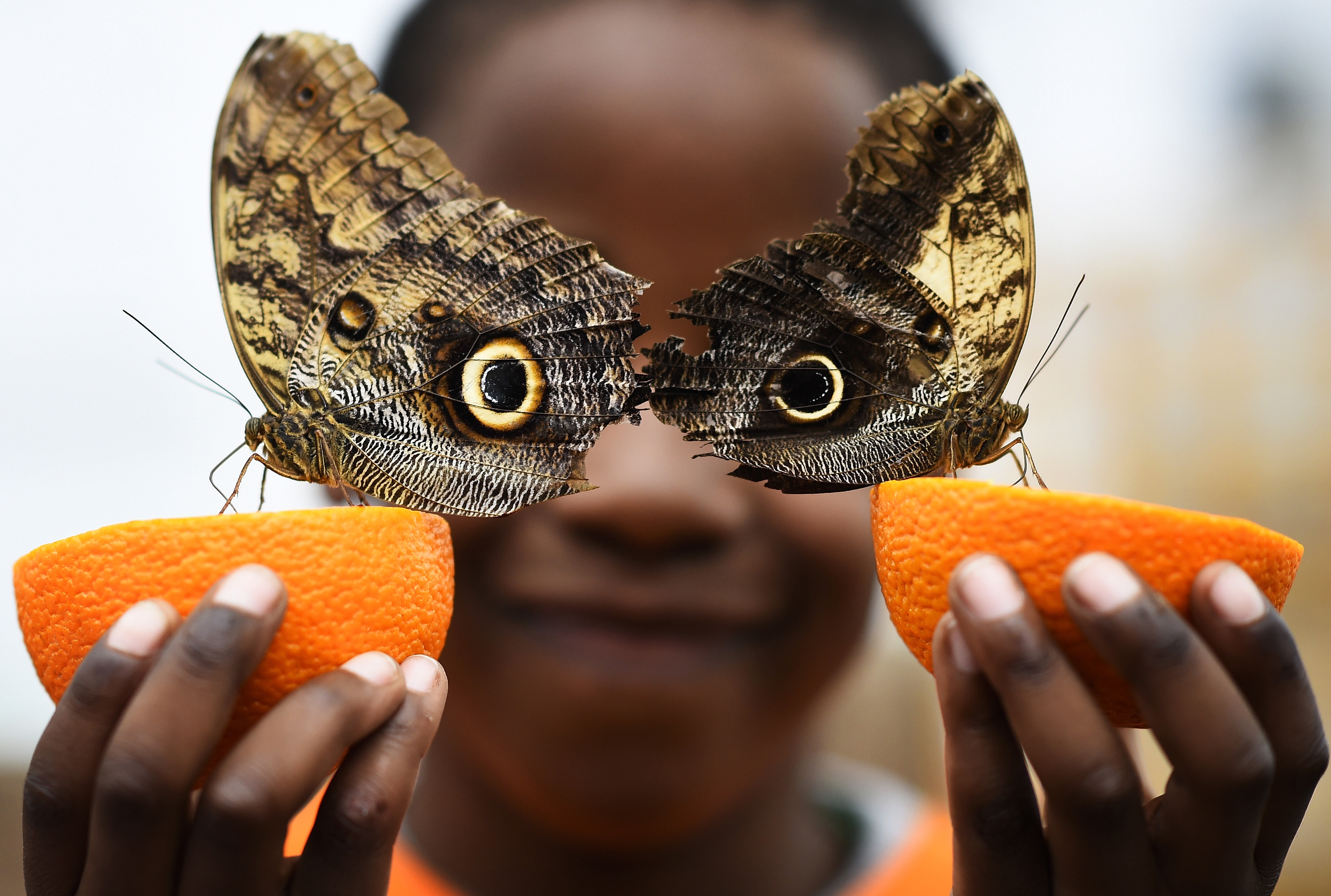 Bjorn, aged 5, smiles as he poses with owl butterflies during an event to launch the Sensational Butterflies exhibition at the Natural History Museum in London, on March 23, 2016.