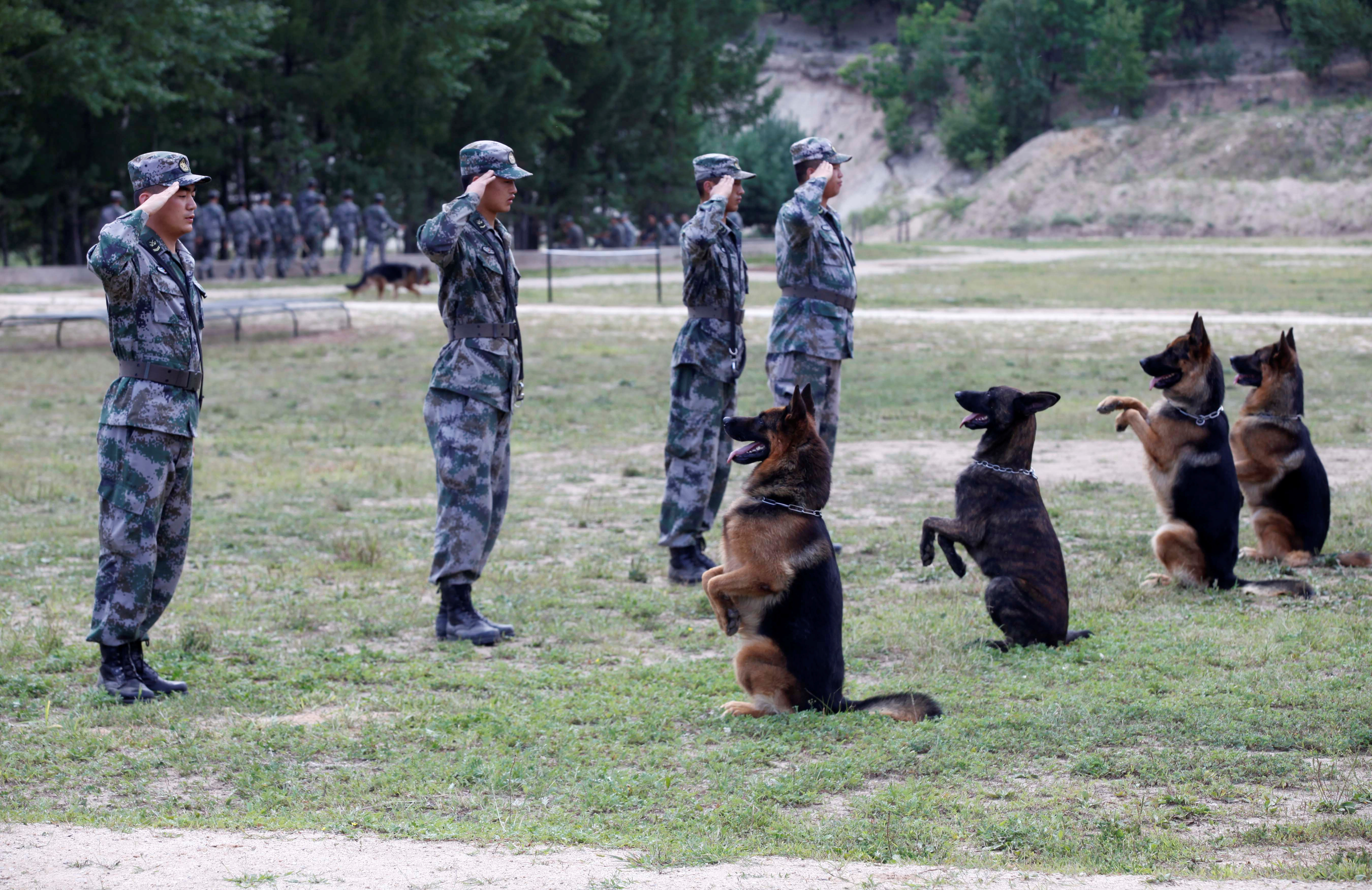 Soldiers of the Chinese People's Liberation Army salute as they perform with their dogs before a dog training competition, in Heihe, China, on Aug. 16, 2016.