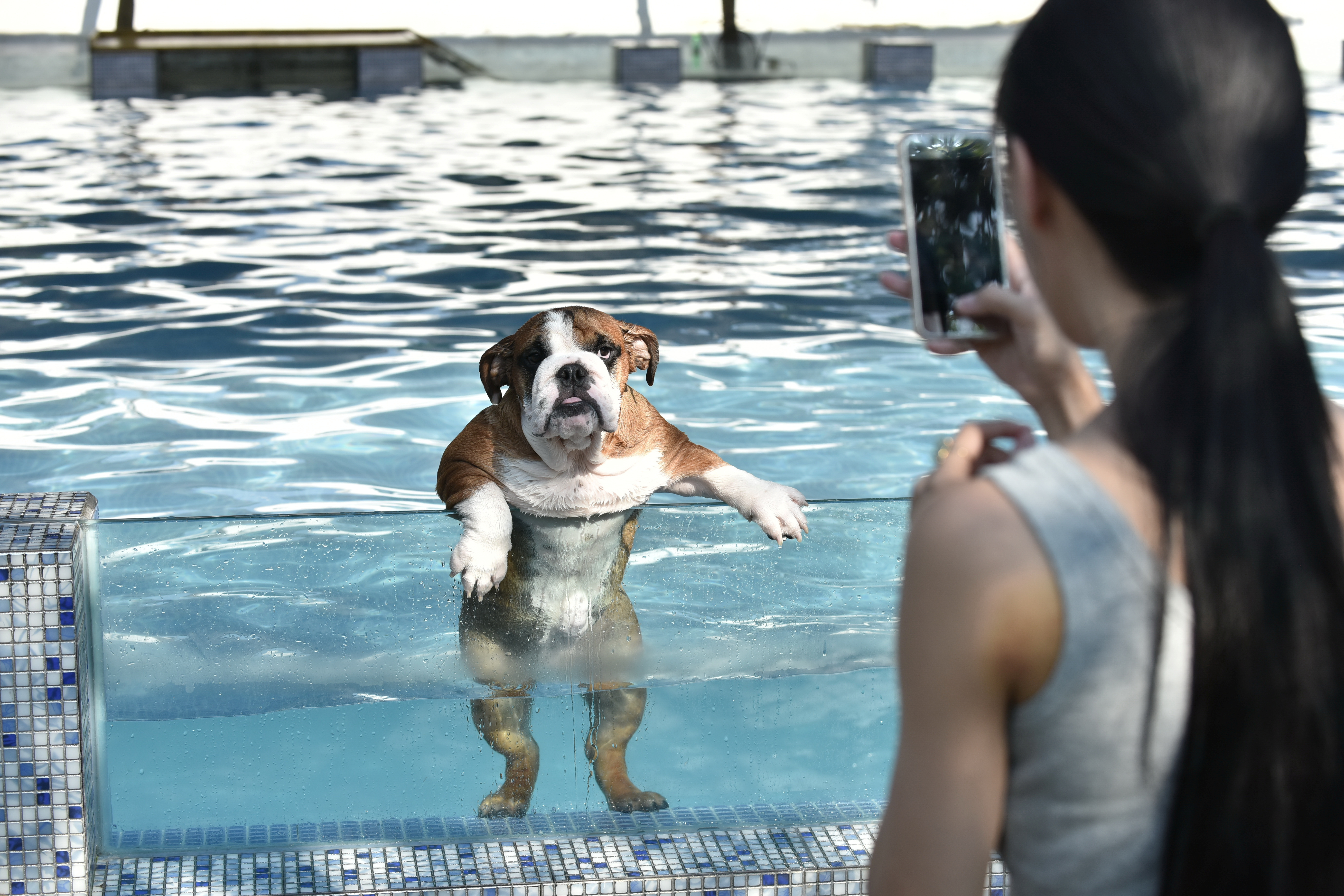 An owner takes a picture of her dog as it climbs up on a glass panel while swimming at a pool for dogs in Chengdu, China, on Aug. 16, 2016.