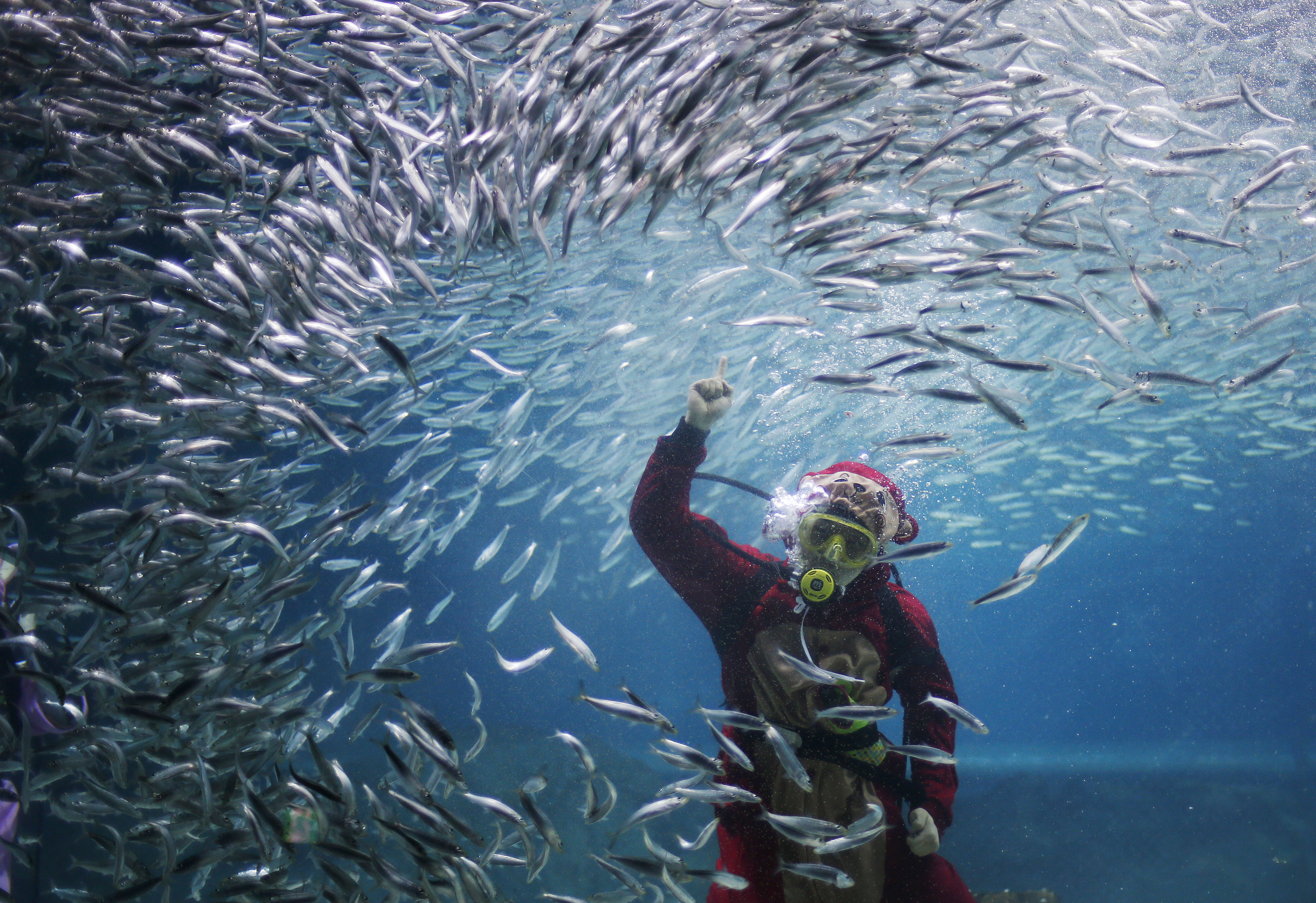 A diver dressed in a monkey costume featuring animal signs from the Chinese zodiac calendar, performs with sardines, in conjunction with Chinese Lunar New Year celebrations at an aquarium in Seoul, South Korea, on Jan. 12, 2016.