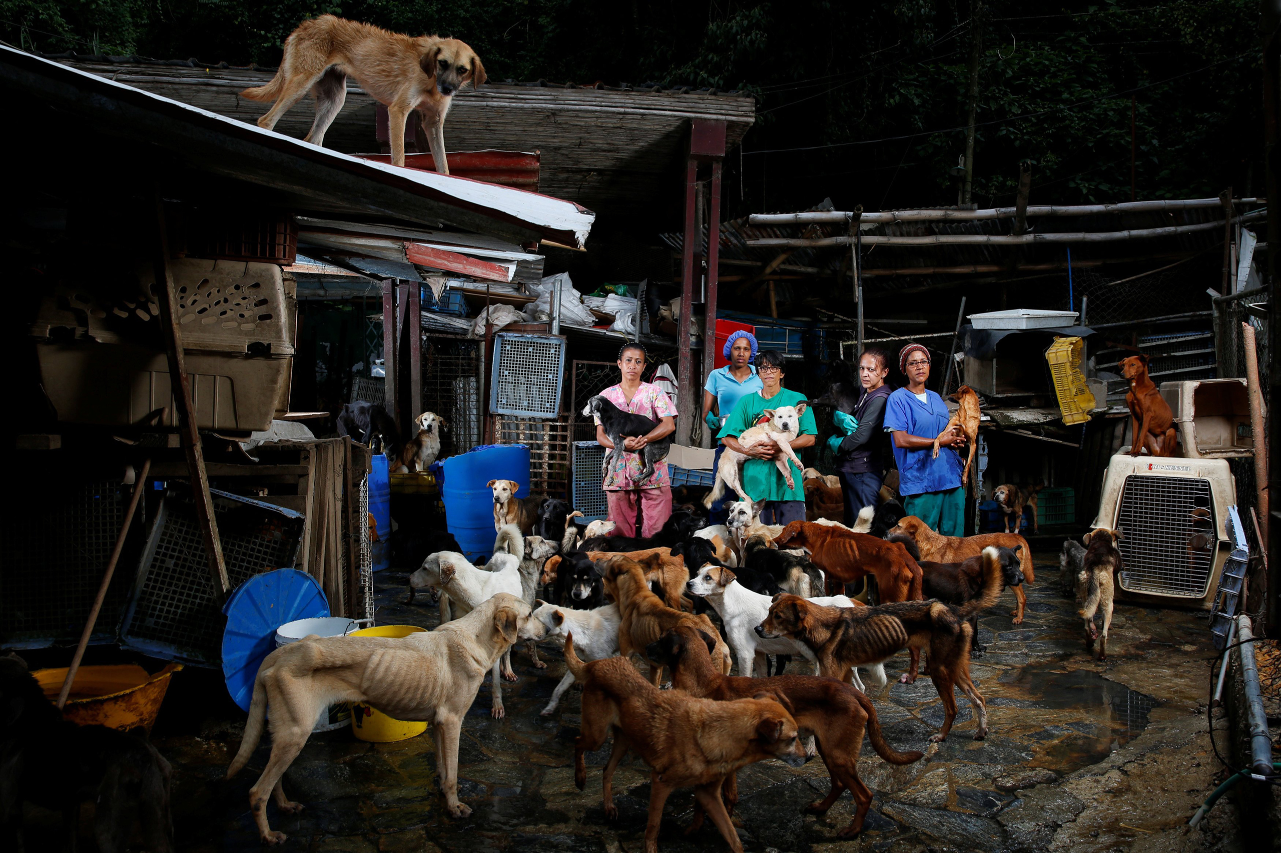 Maria Silva, Milena Cortes, Maria Arteaga, Jackeline Bastidas and Gissy Abello pose for a picture at the Famproa dogs shelter where they work, in Los Teques, Venezuela, Aug. 25, 2016.