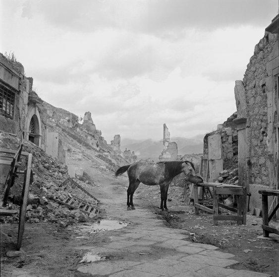 Horse Eating Hay, Ruins of Cassino, Italy, 1946 by Tony Vaccaro.