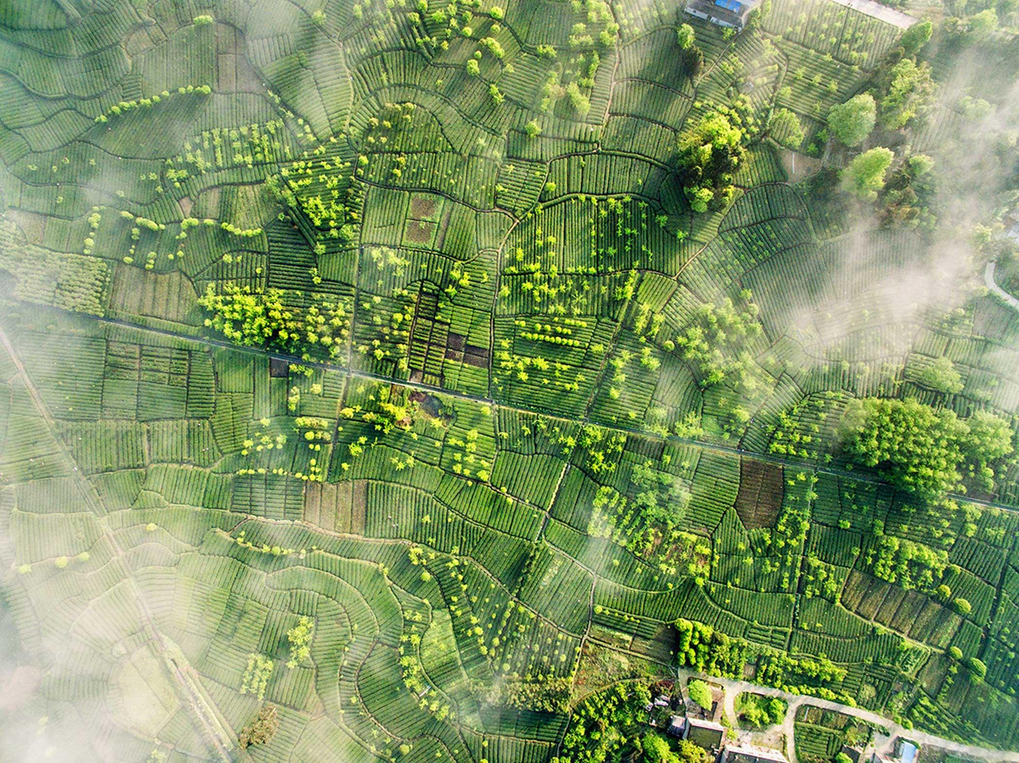 Mingshan, Ya'an ,Sichuan Province, China