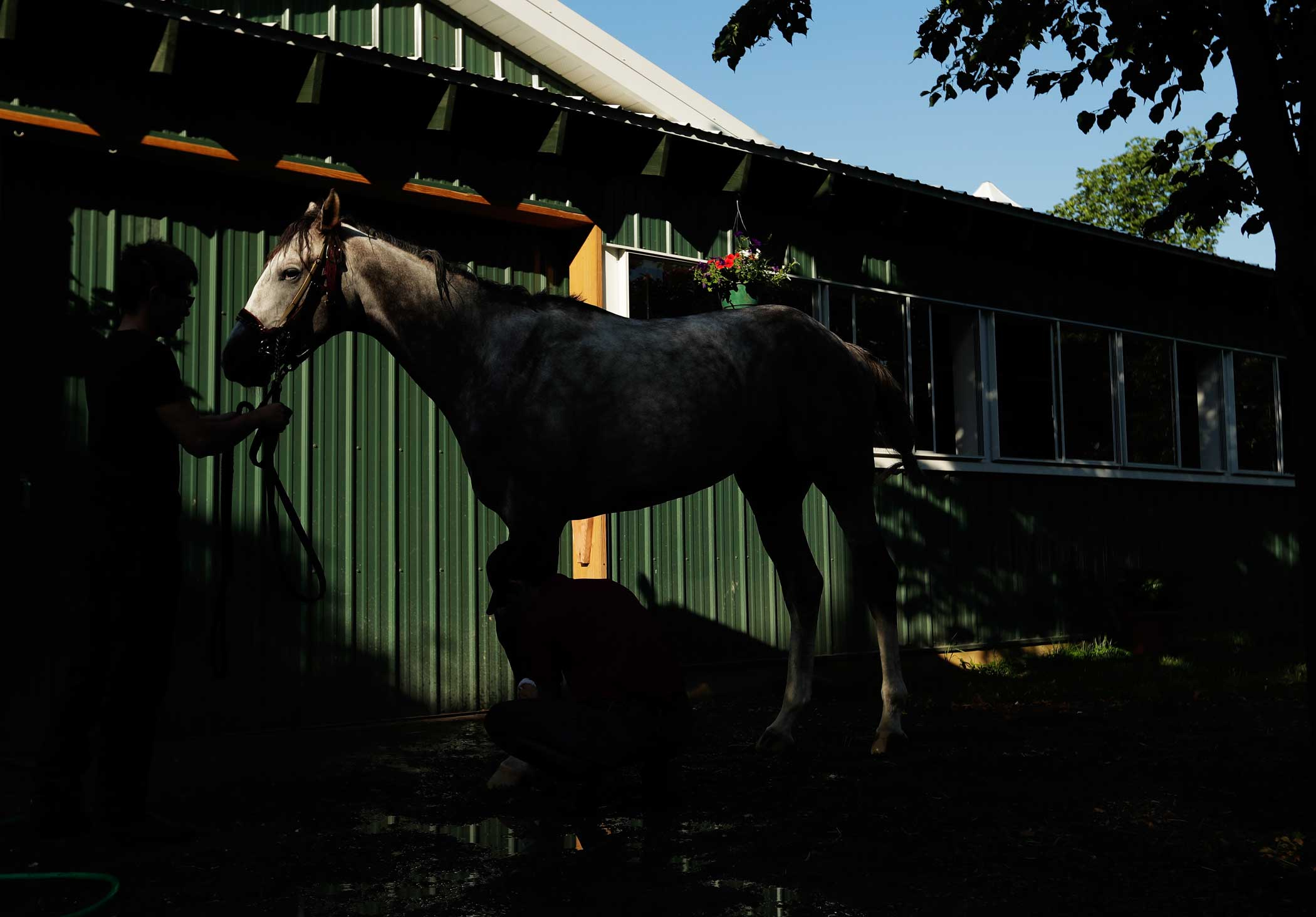 Belmont Stakes Contender Lani looks on after a training session prior to the 148th running of the Belmont Stakes at Belmont Park on June 6, 2016 in Elmont, New York.