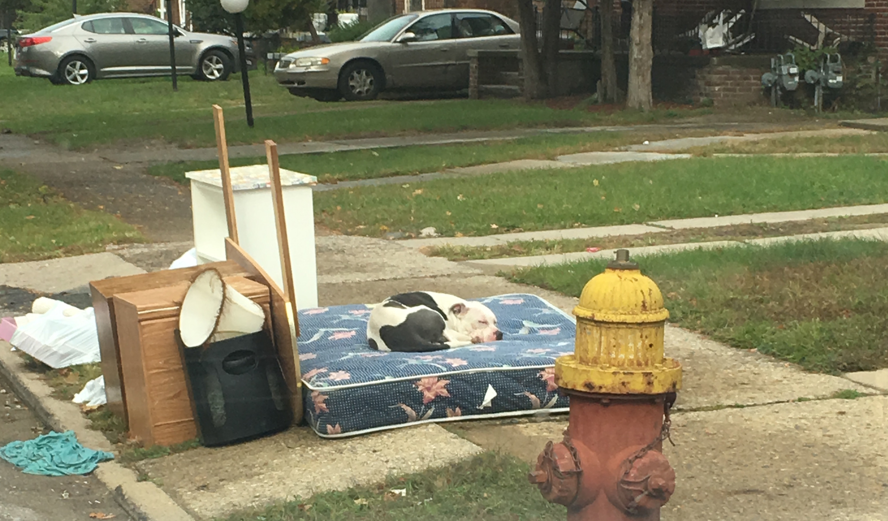 Boo the dog sits on a mattress outside the home where his owners abandoned him. He was rescued earlier this month by Dustin Oliver of the Detroit Youth and Dog Rescue.