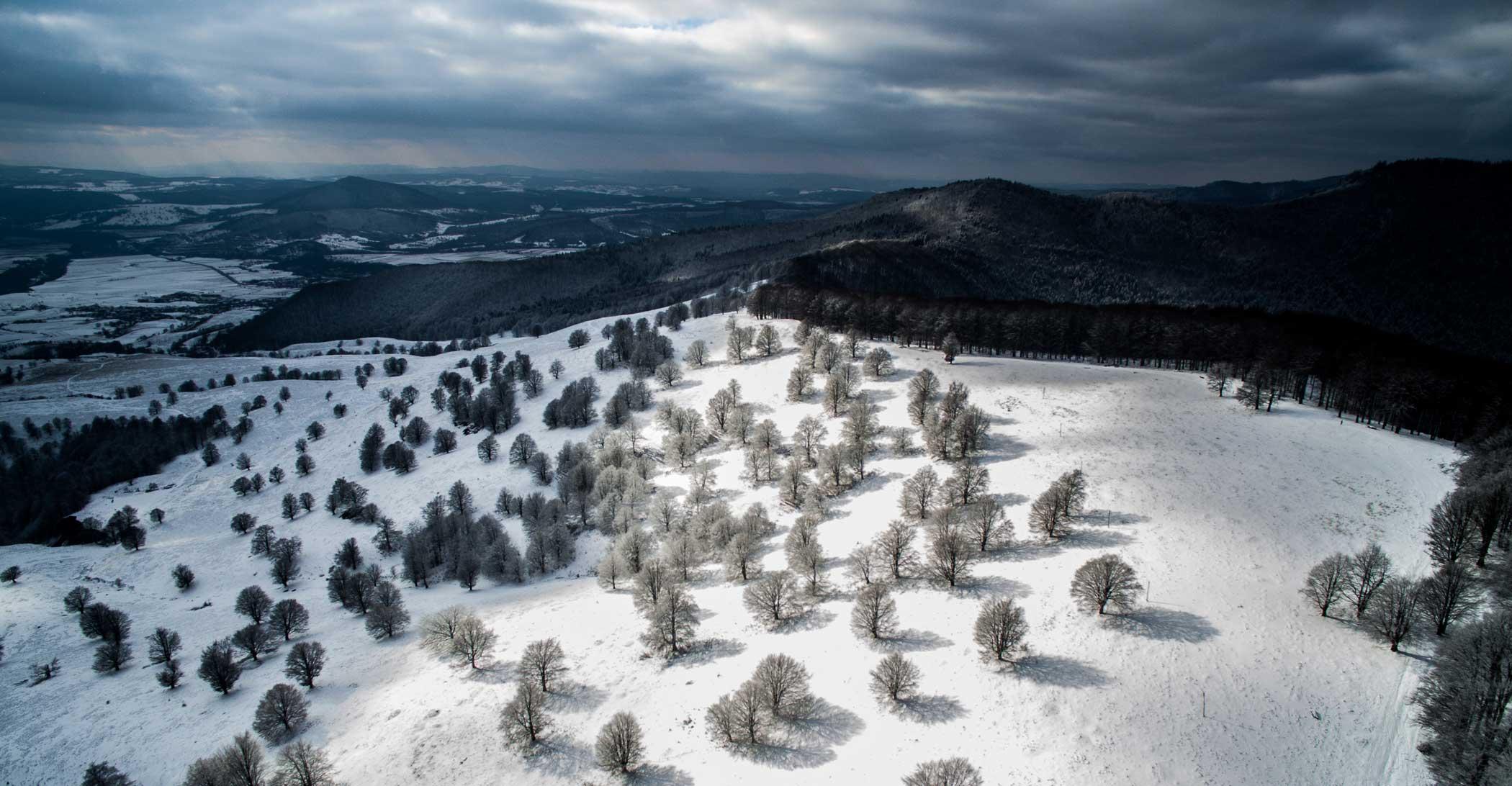 Winter trees in Sfanta Ana,                                Romania.