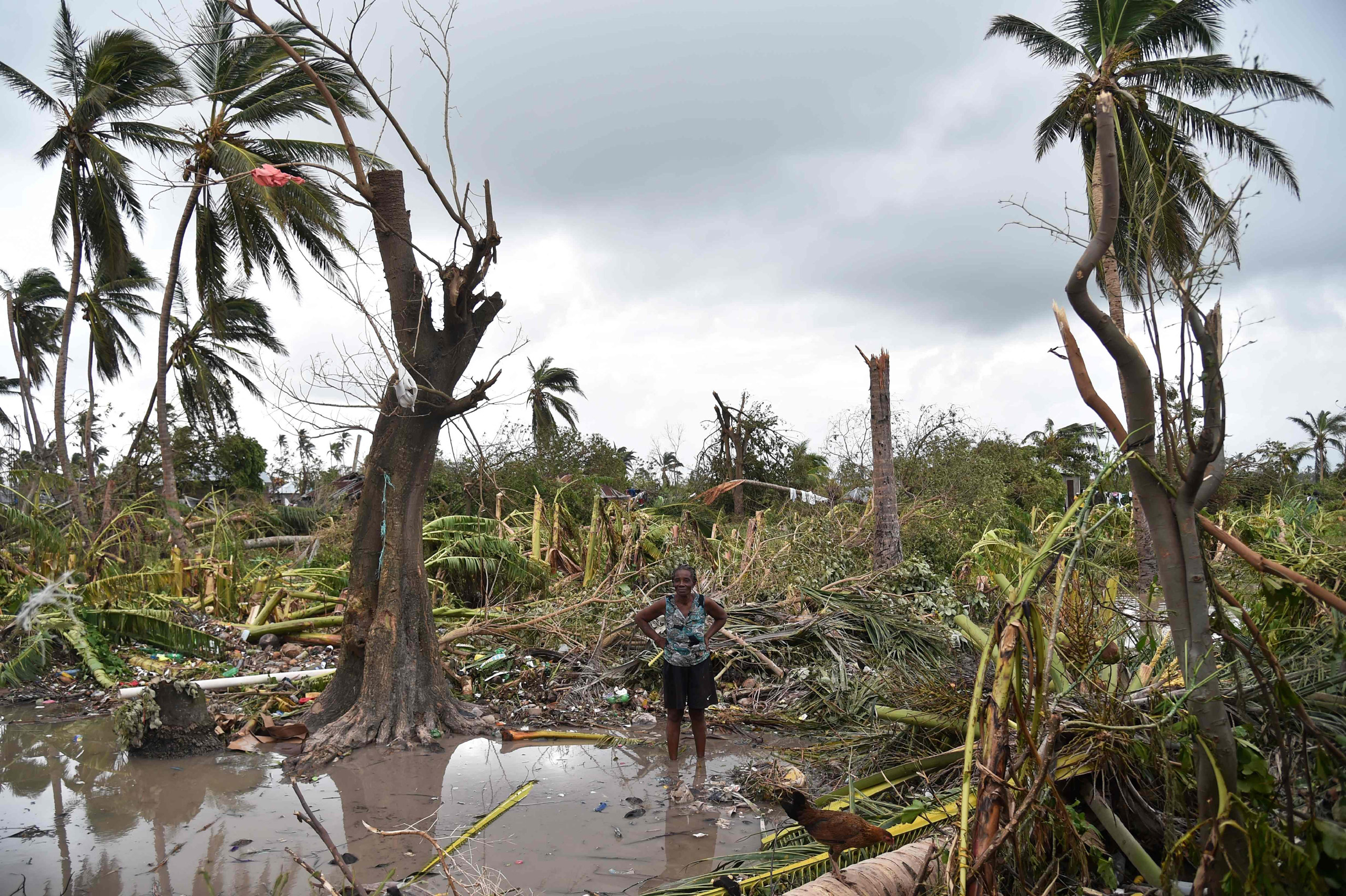 A woman stands in a field of destroyed trees after the passing of Hurricane Matthew in Sous Roche in Les Cayes, Haiti, on Oct. 6, 2016.