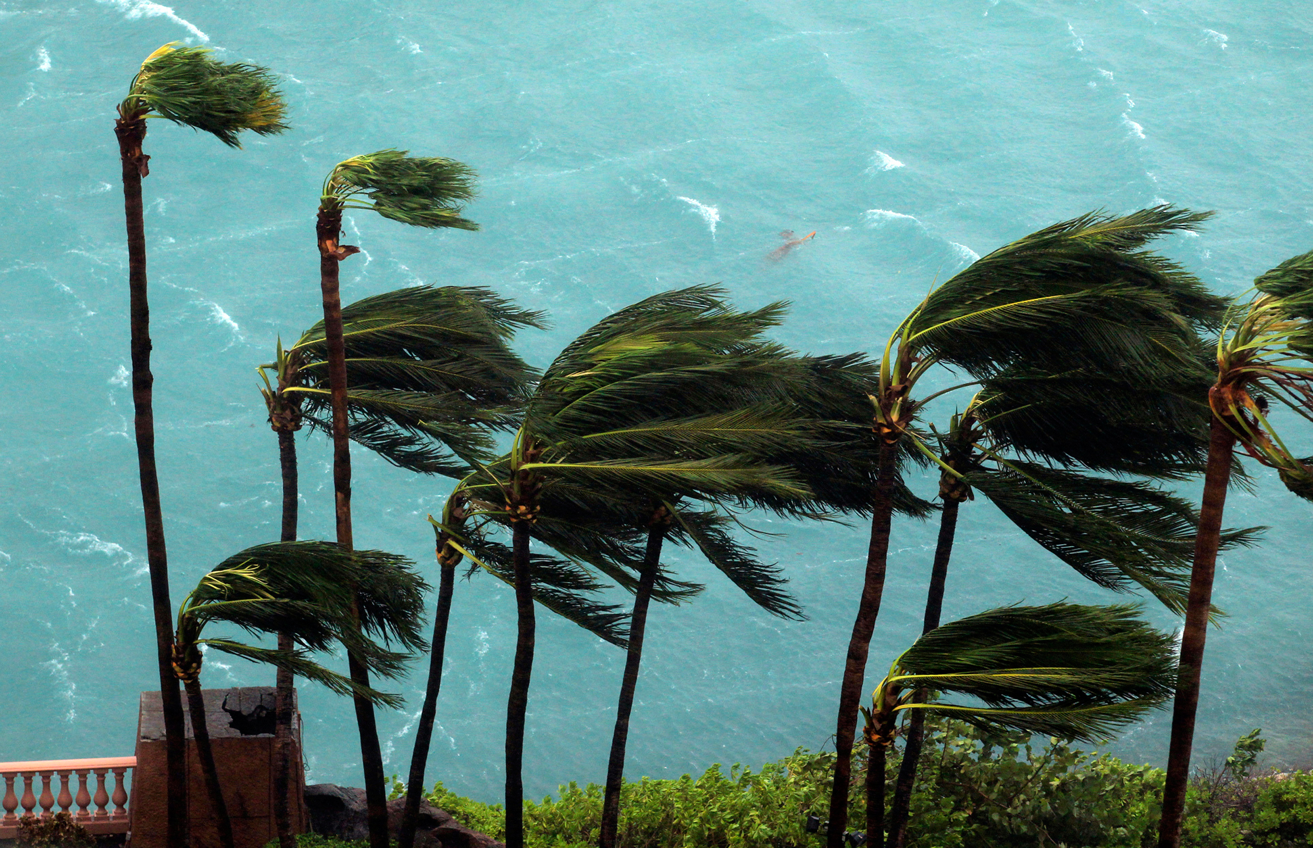 Wind brought by Hurricane Matthew blow palm trees on Paradise Island in Nassau, Bahamas, on Oct. 6, 2016.