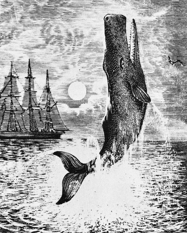 Nineteenth-century illustration for Herman Melville's 'Moby-Dick'