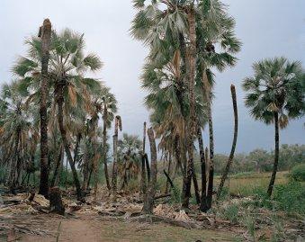 1-palm-wine-collectors-kyle-weeks-namibia-portrait