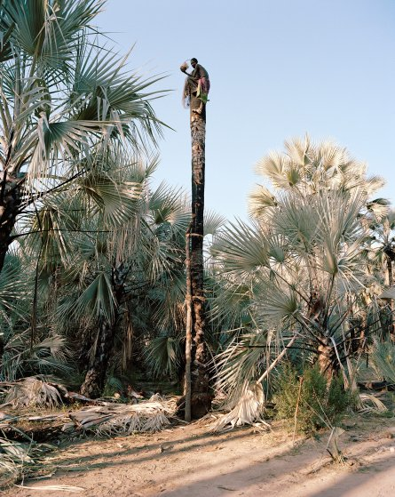 3-palm-wine-collectors-kyle-weeks-namibia-portrait