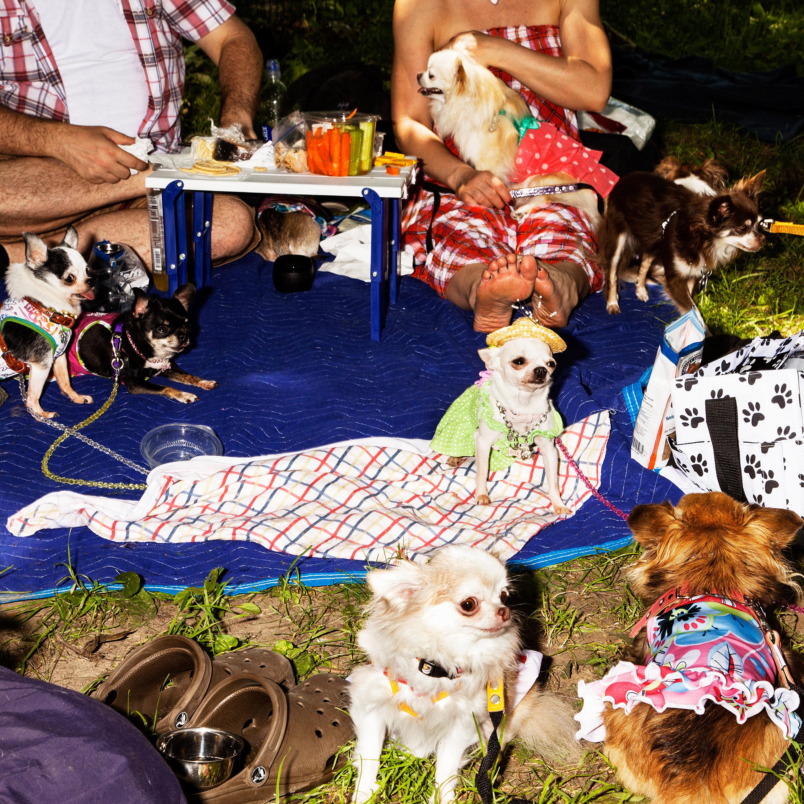 Ada Nieves Chihuahua NationNew York, NY, 2015