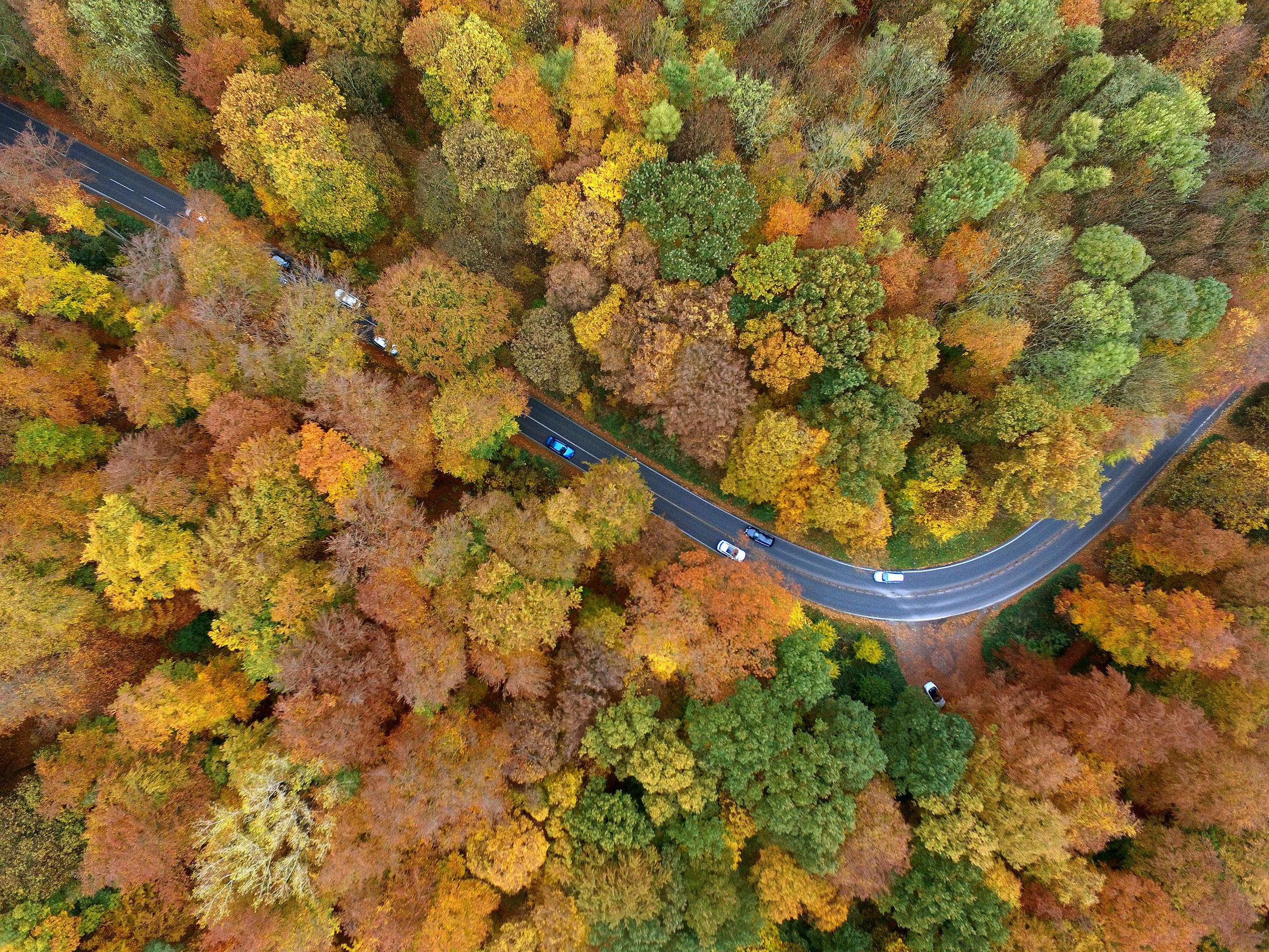 Autumnal colored landscape in Cologne, Germany, on Nov. 4, 2016