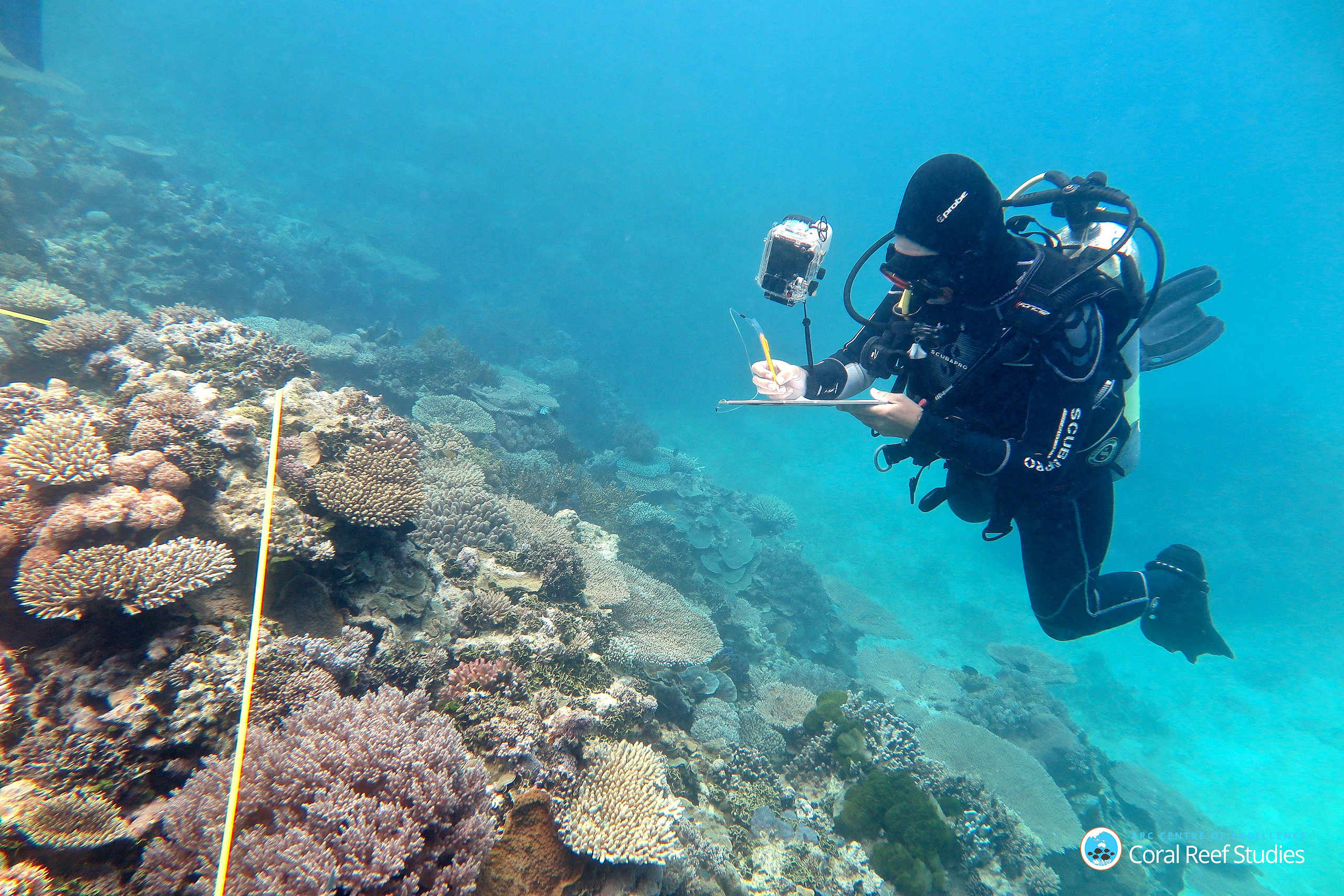 Grace Frank completing bleaching surveys along a transect line on an area known as One Tree Reef, in the Capricorn Group of Islands, on the Great Barrier Reef in Australia.