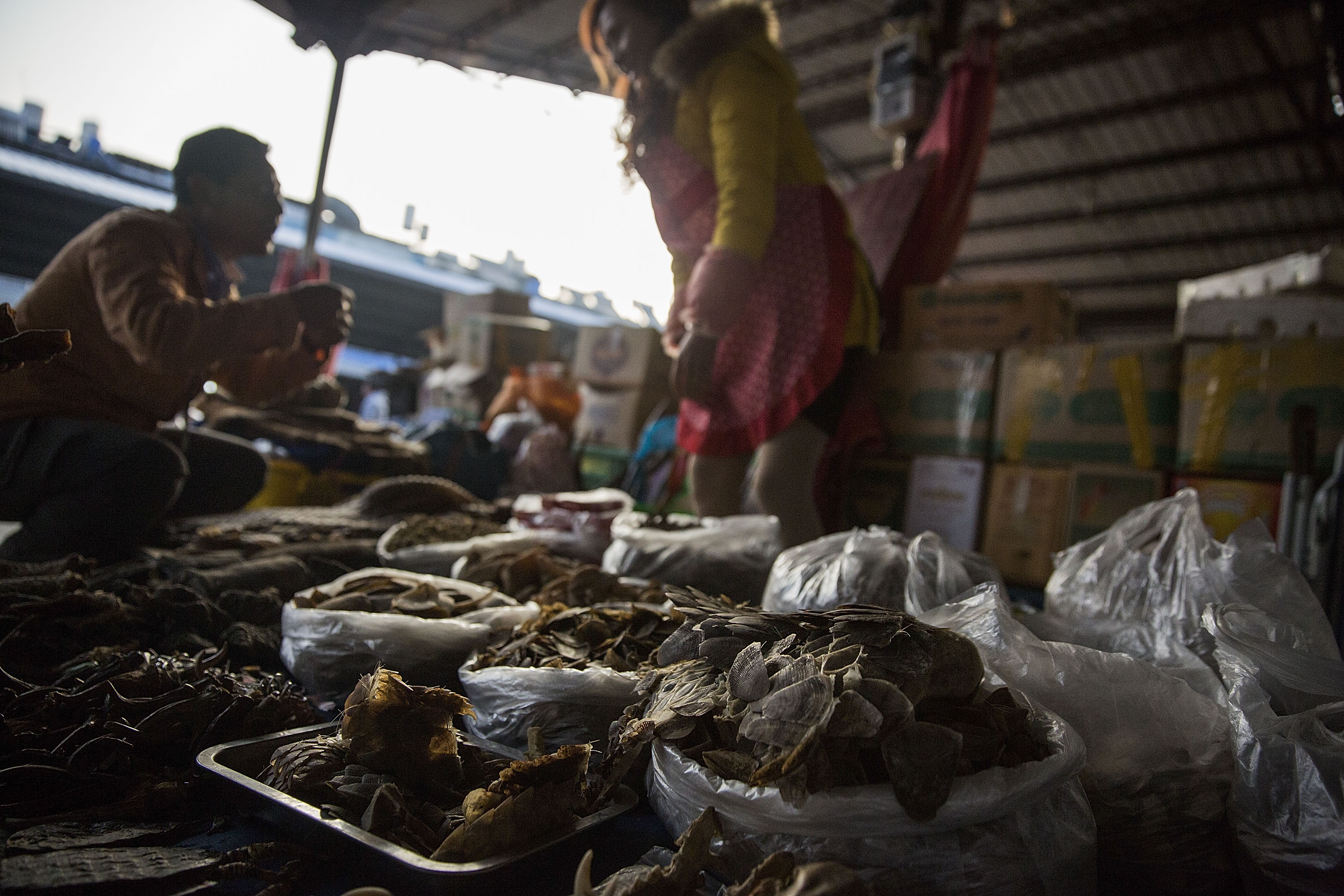 A woman talks with a customer at her stall selling pangolin scales and other exotic-animal parts on Feb. 17, 2016, in Mong La, Burma