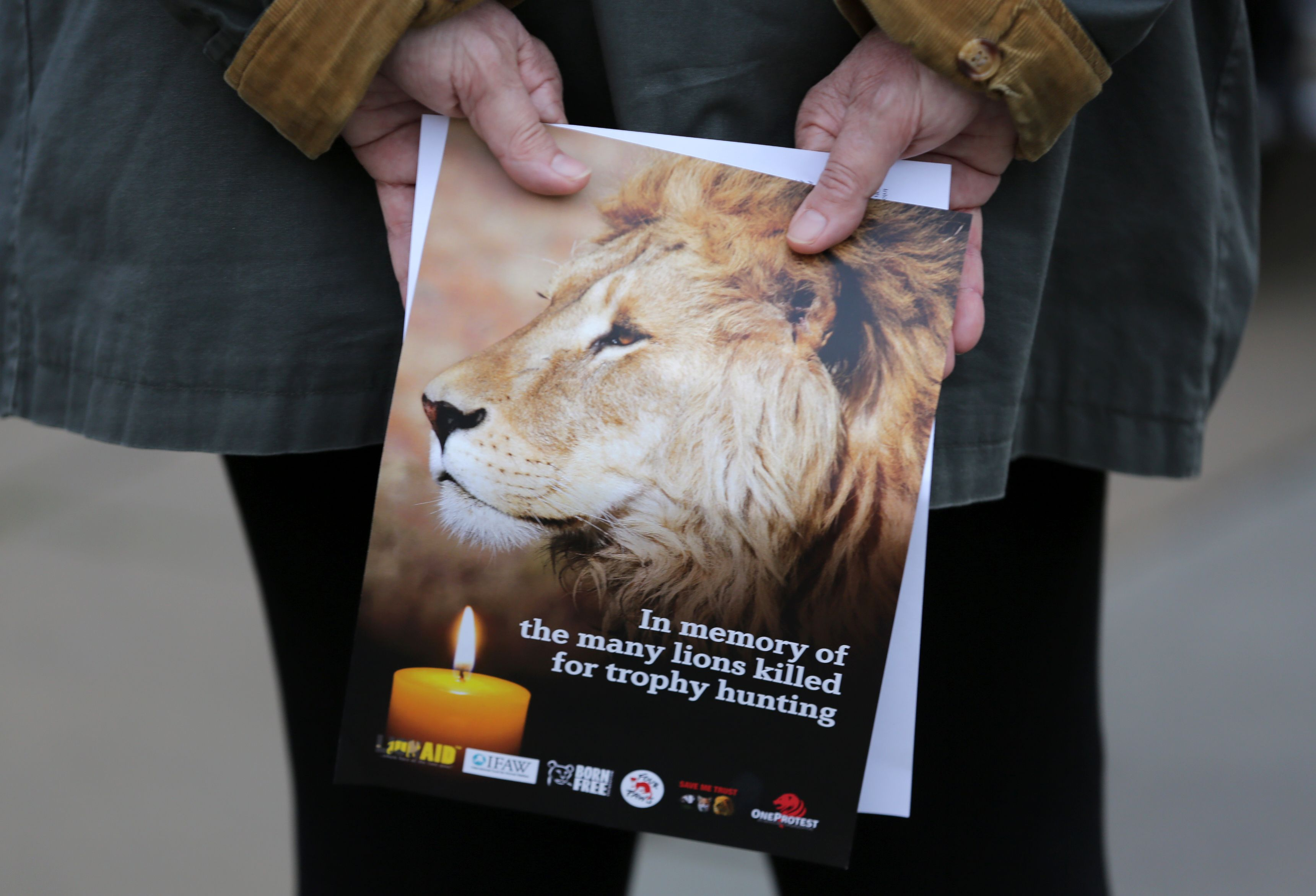 A pamphlet showing an image of Cecil the lion, is held at a vigil in central London on July 30, 2016.                     Cecil was killed by American dentist and trophy hunter, Walter Palmer, in Zimbabwe on 1st July 2015.