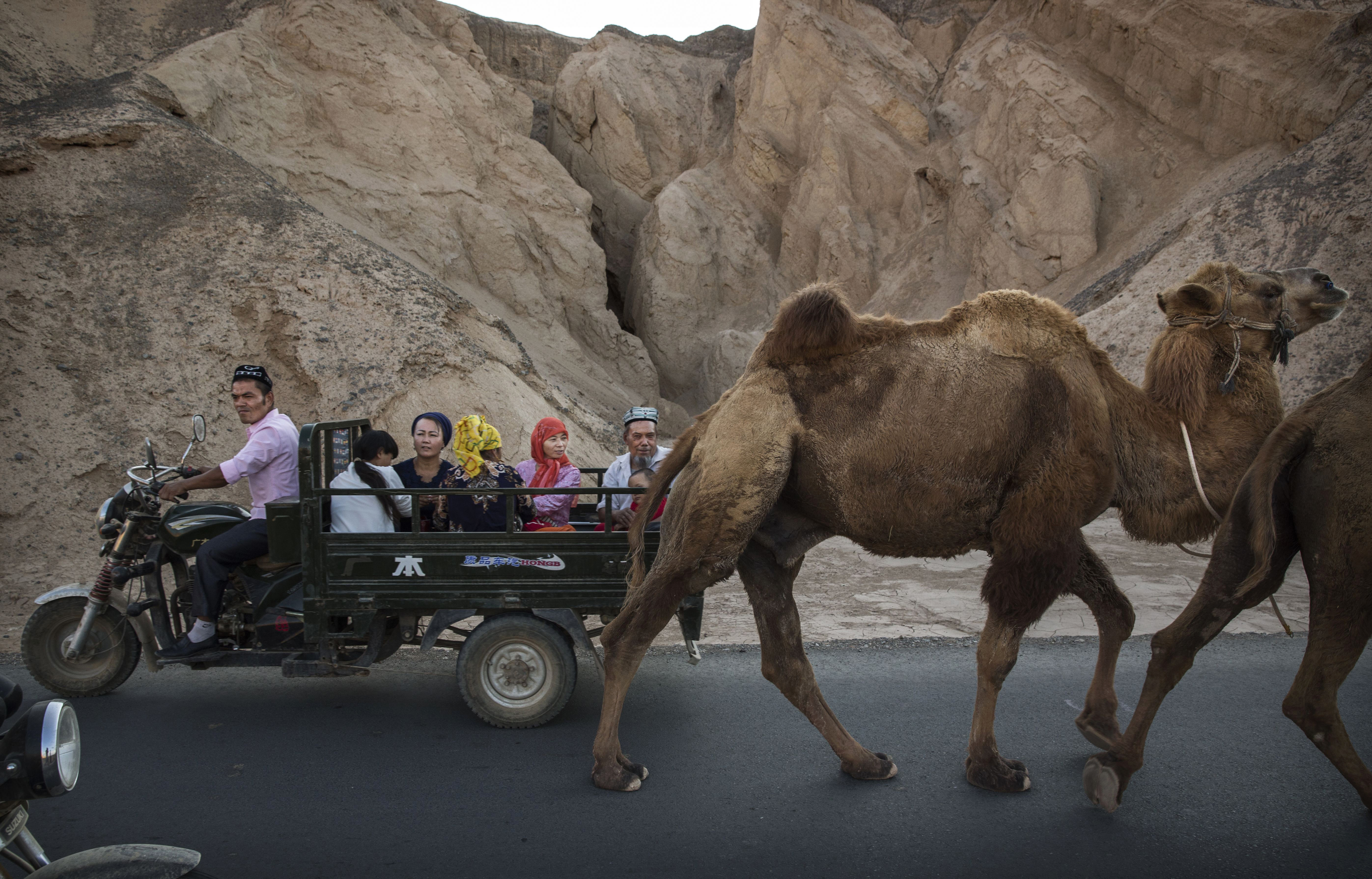 A Uighur family rides past a camel in Turpan county, in China's autonomous region of Xinjiang, on Sept. 12, 2016