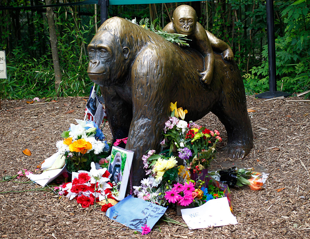 Flowers lay around a bronze statue of a gorilla and her baby outside the Cincinnati Zoo's Gorilla World exhibit days after a 3-year-old boy fell into the moat and officials were forced to kill Harambe, a 17-year-old Western lowland silverback gorilla June 2, 2016 in Cincinnati, Ohio.