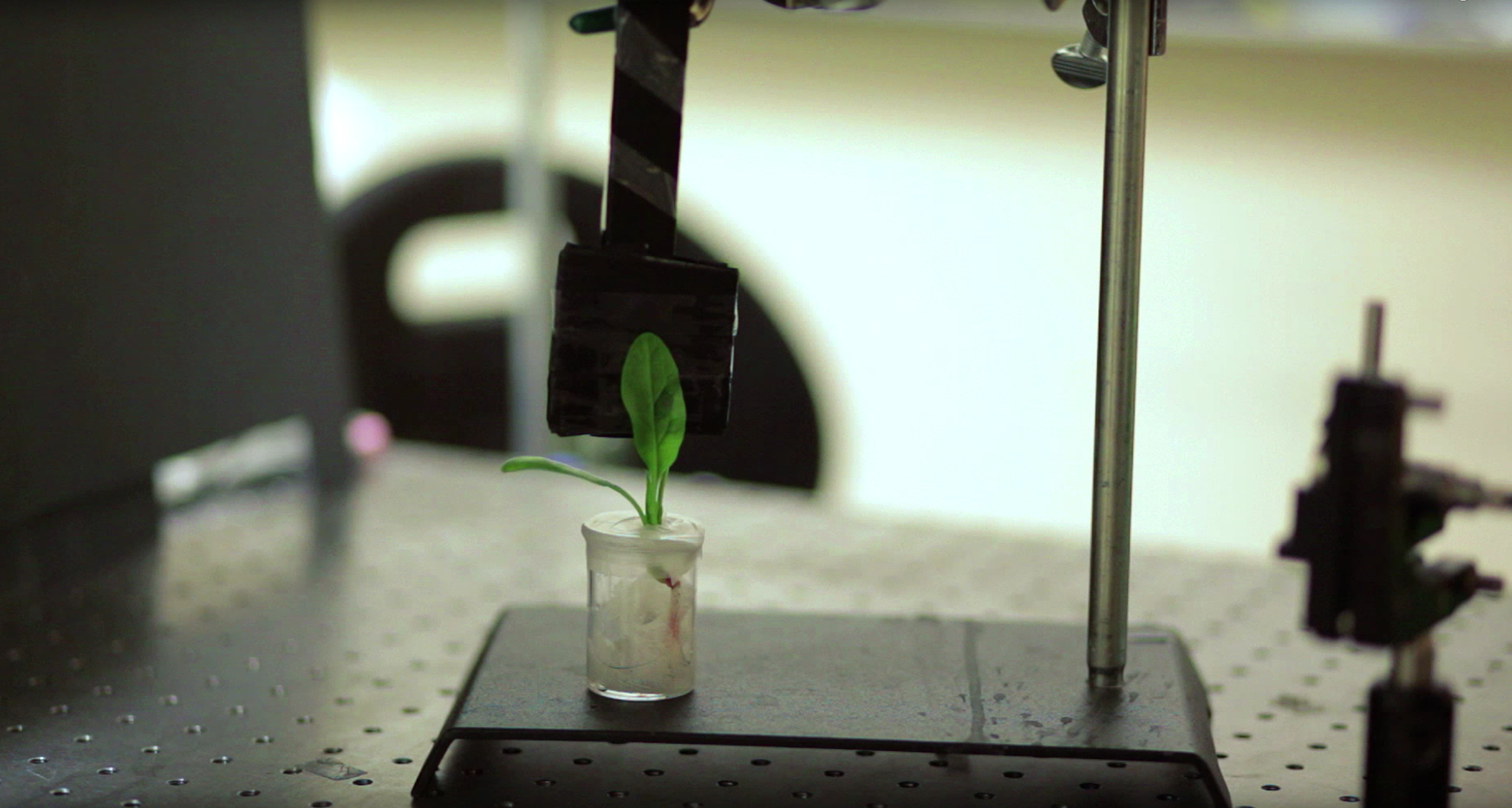 Engineers at MIT have transformed spinach plants into bomb-sniffing machines that can wirelessly relay warning signals to a handheld device similar to a smartphone