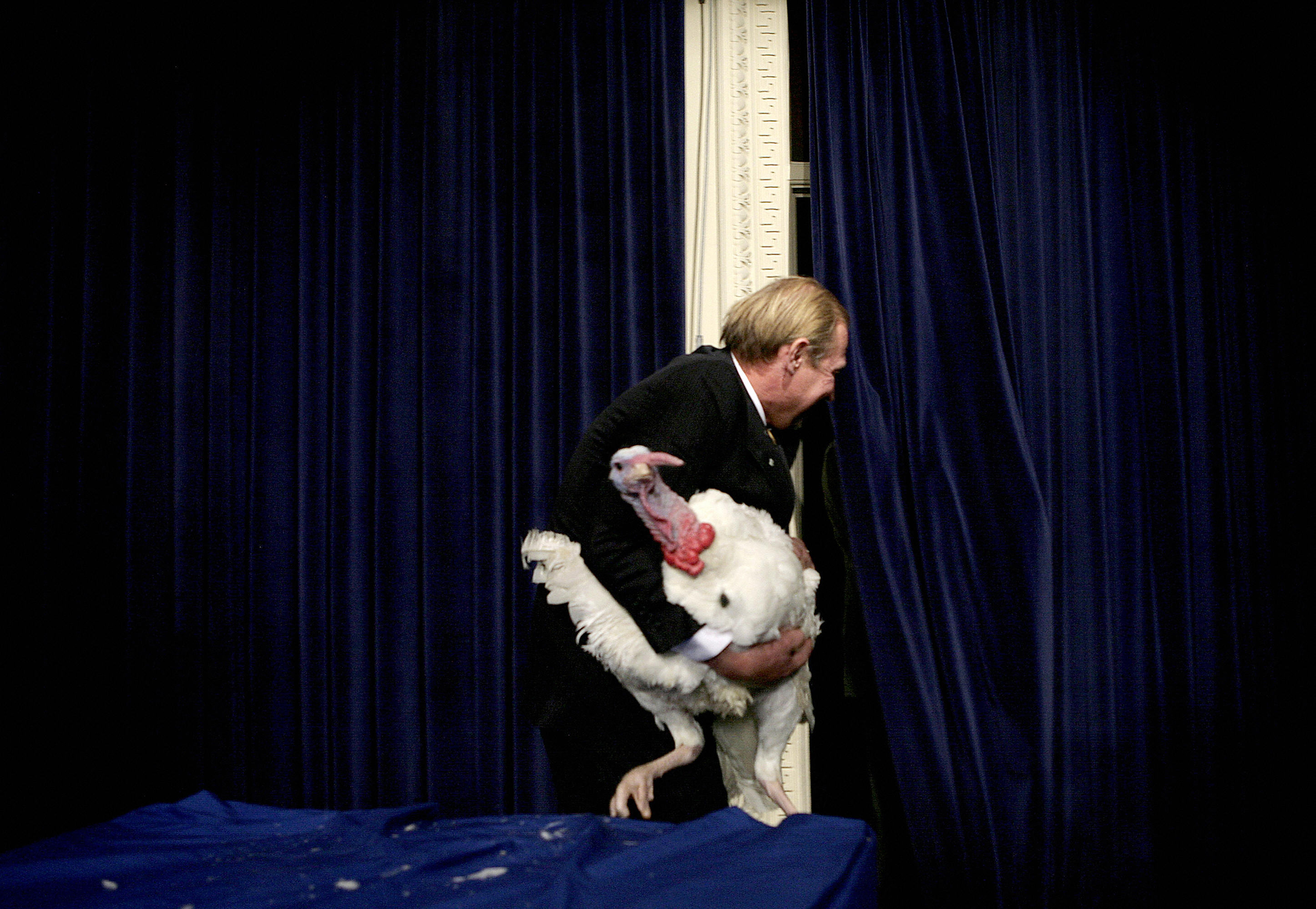 Marshmallow, the national Thanksgiving turkey, is carried away by James Trites, of Minnesota, who raised Marshmallow, after President George W.  Bush pardoned him during an event in the White House Complex Nov. 22, 2005 in Washington, DC.