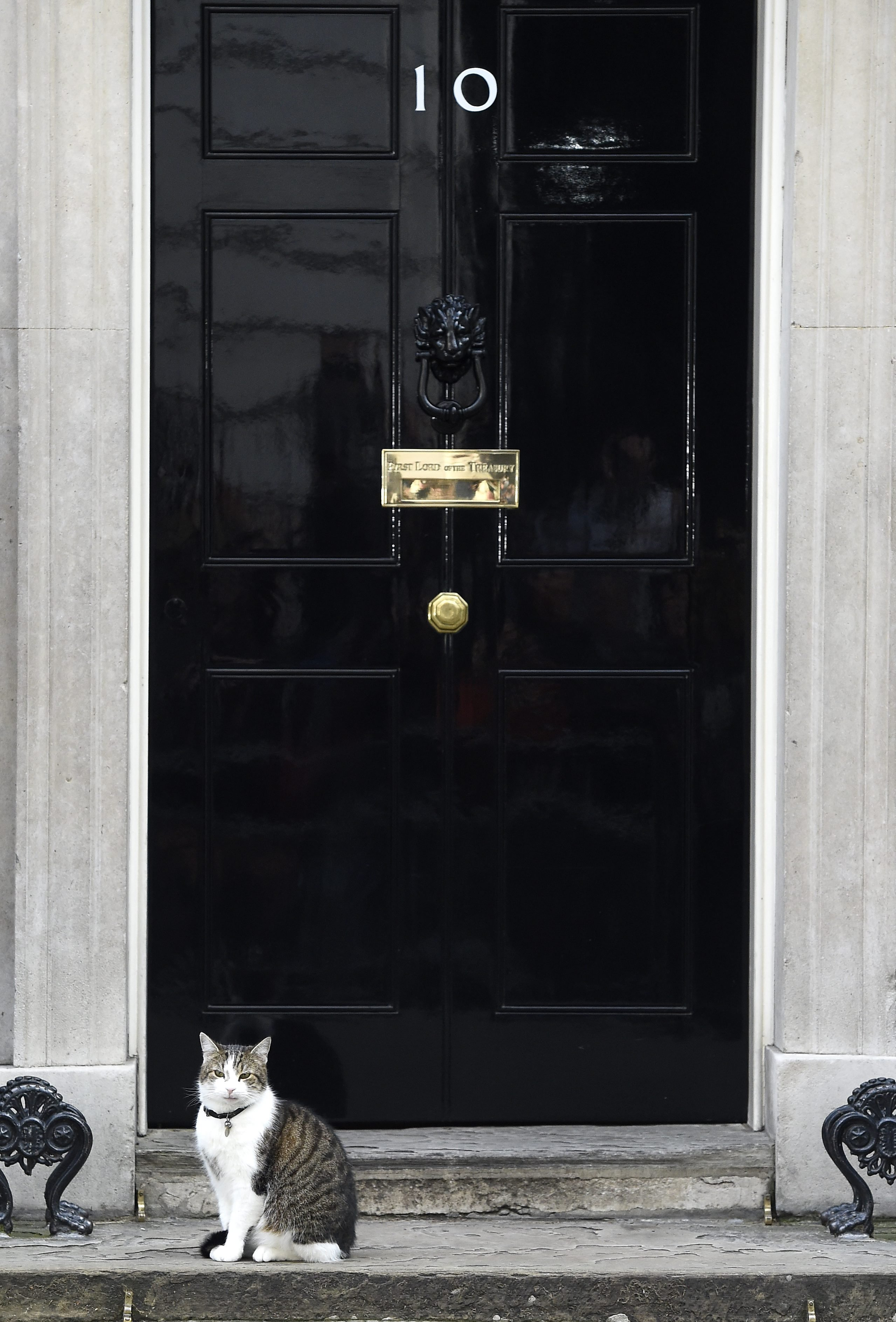 Larry, The Downing Street Cat, stands outside N10 Downing Street in London, on June 24, 2016.
