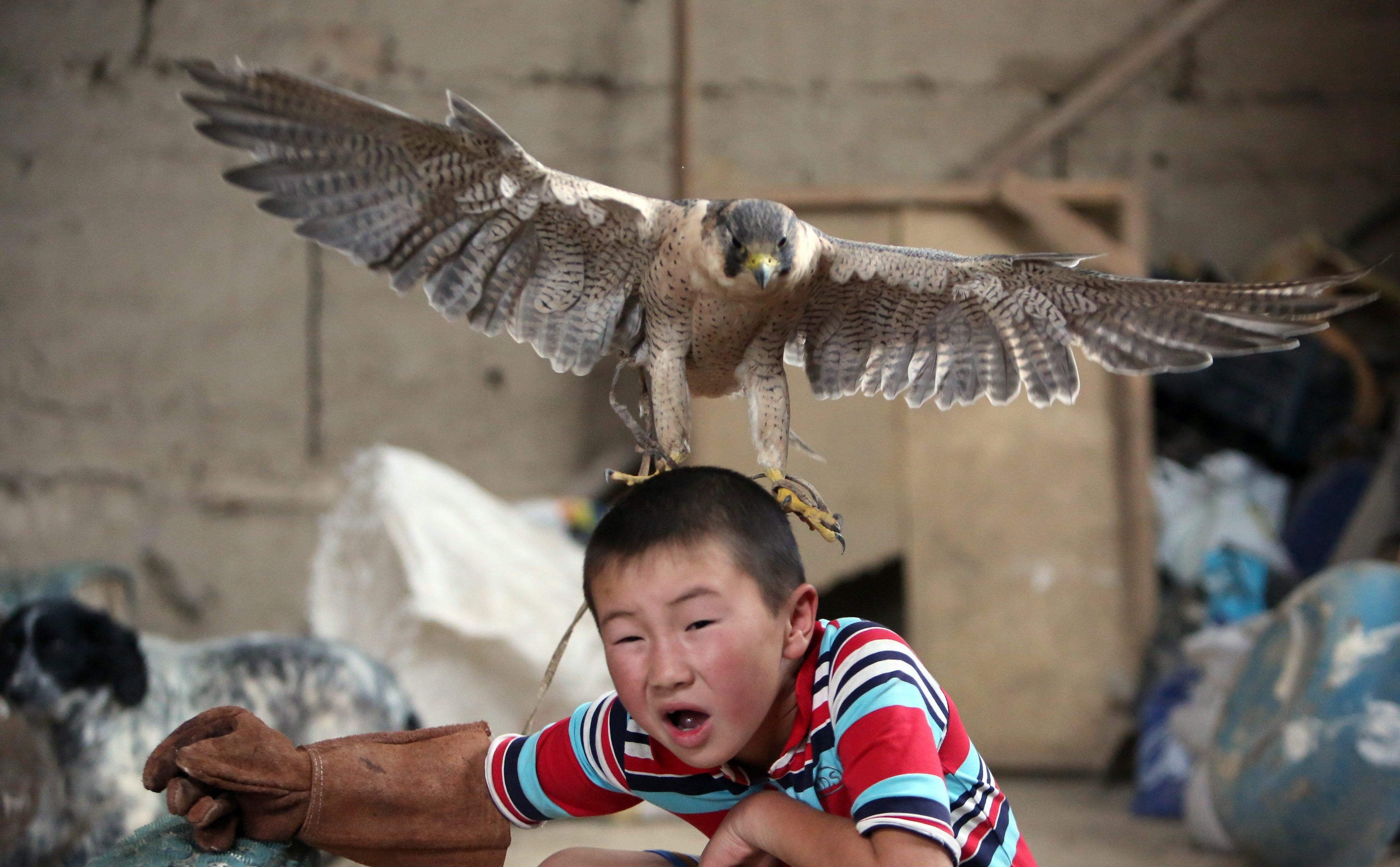 Azat Shajbyrov reacts to a baby falcon in the village of Bokonbaevo, Issyk-Kul area, Kyrgyzstan, on June 22, 2016.