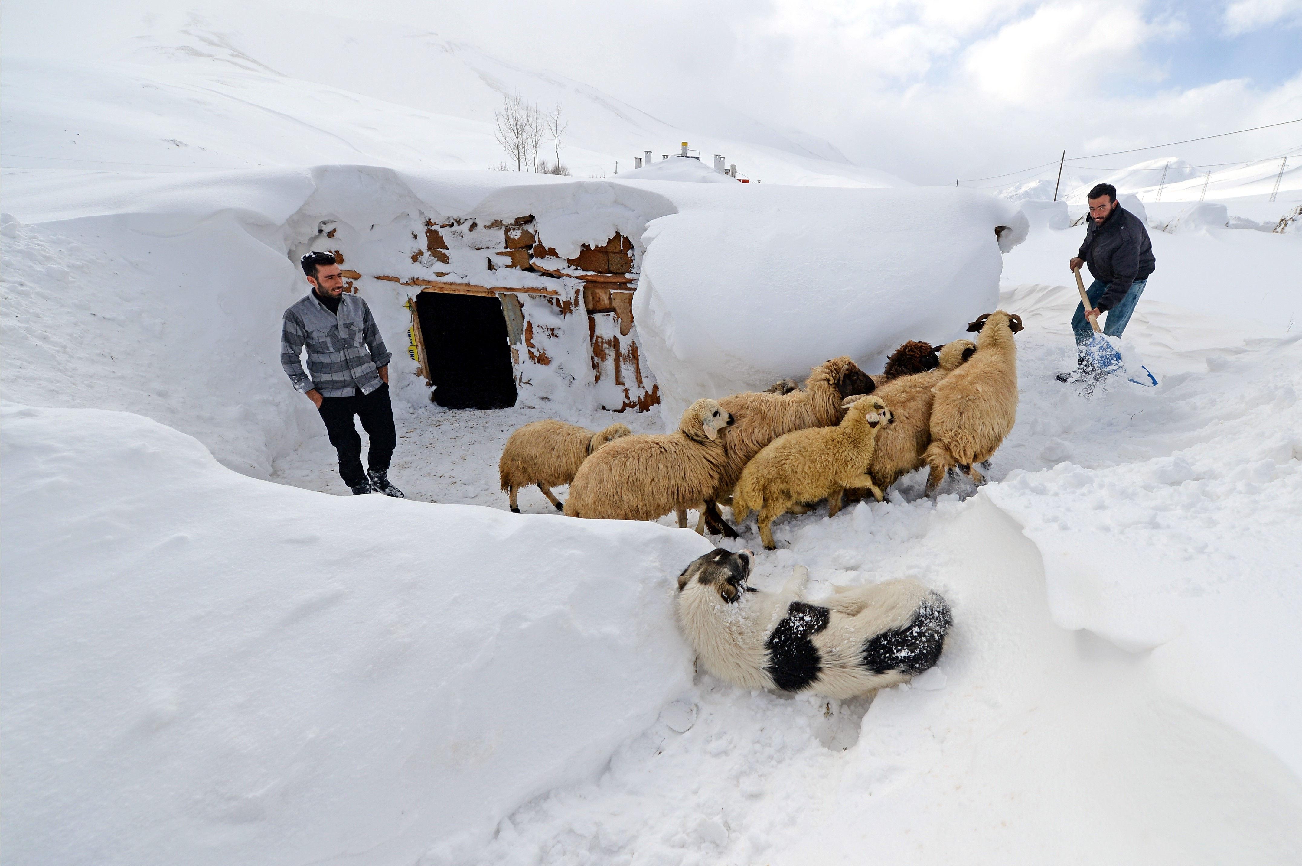 A man, whose house is covered with snow tries to clear the path in front of his barn in Van, Turkey, on Jan. 21, 2016.