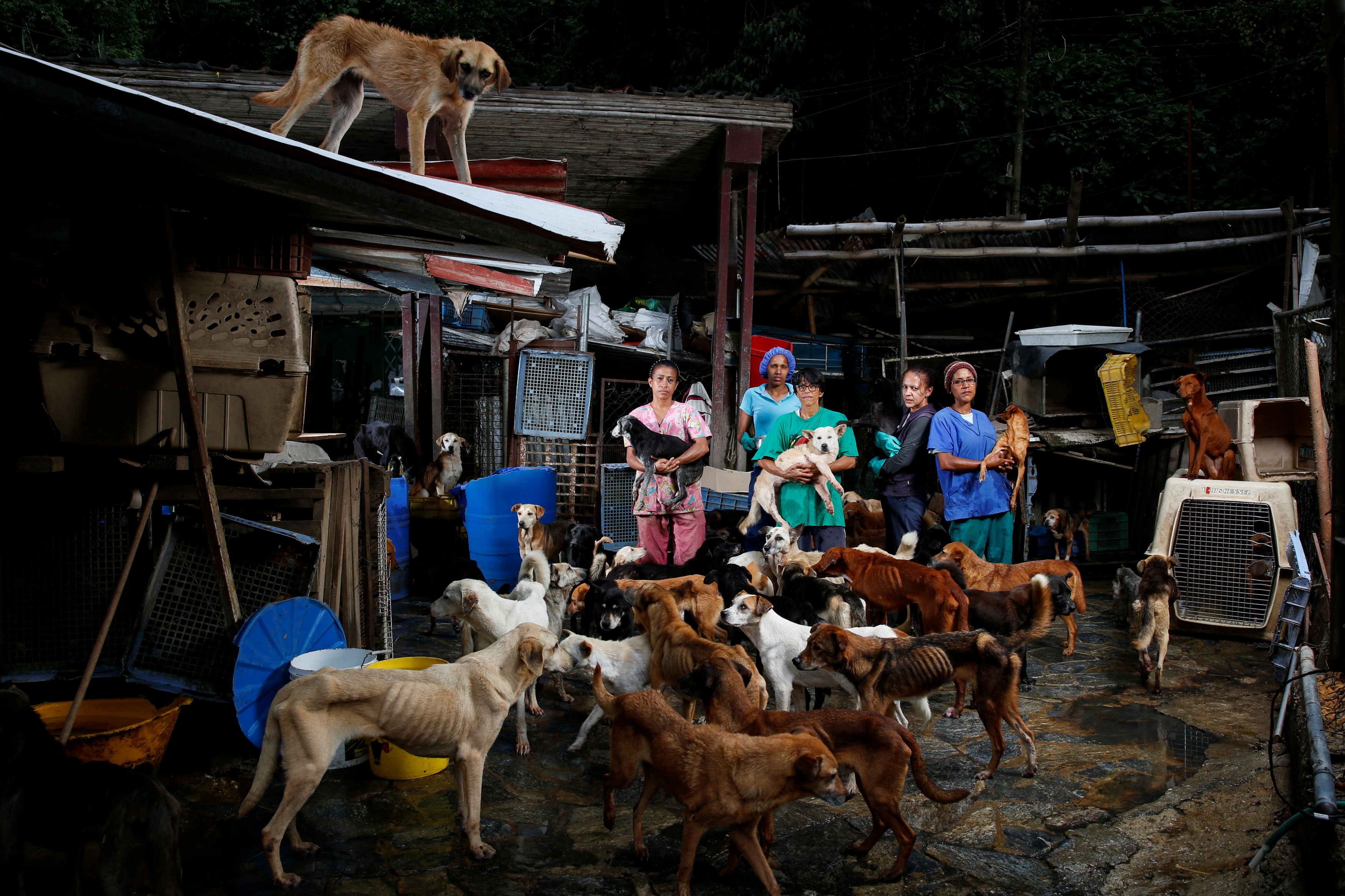 From left: Maria Silva, Milena Cortes, Maria Arteaga, Jackeline Bastidas and Gissy Abello at the Famproa dogs shelter where they work, in Los Teques, Venezuela, on Aug. 25, 2016.