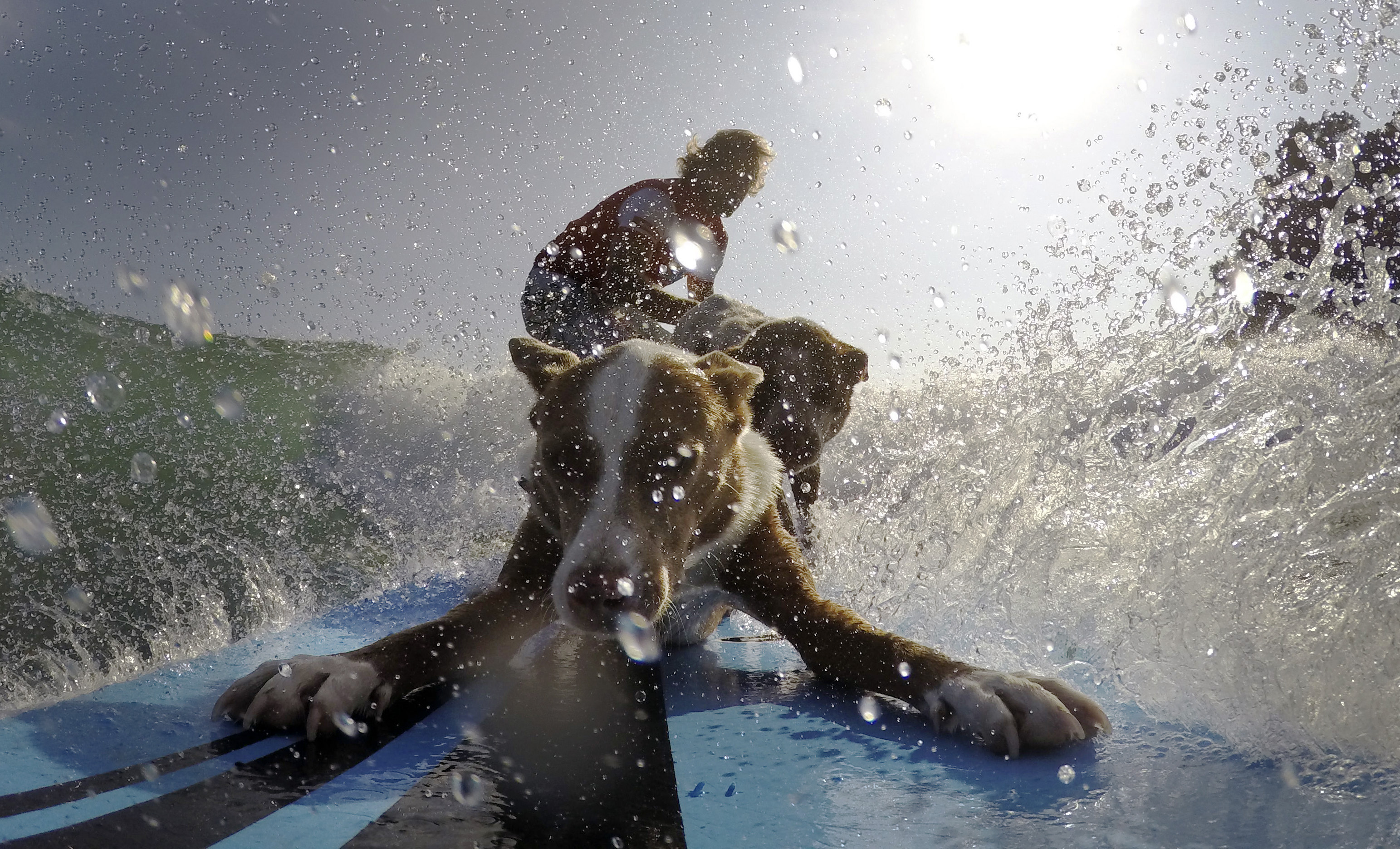 Australian dog trainer and former surfing champion Chris de Aboitiz rides a wave with his dogs Rama and Millie off Sydney's Palm Beach, Australia, on Feb. 18, 2016.