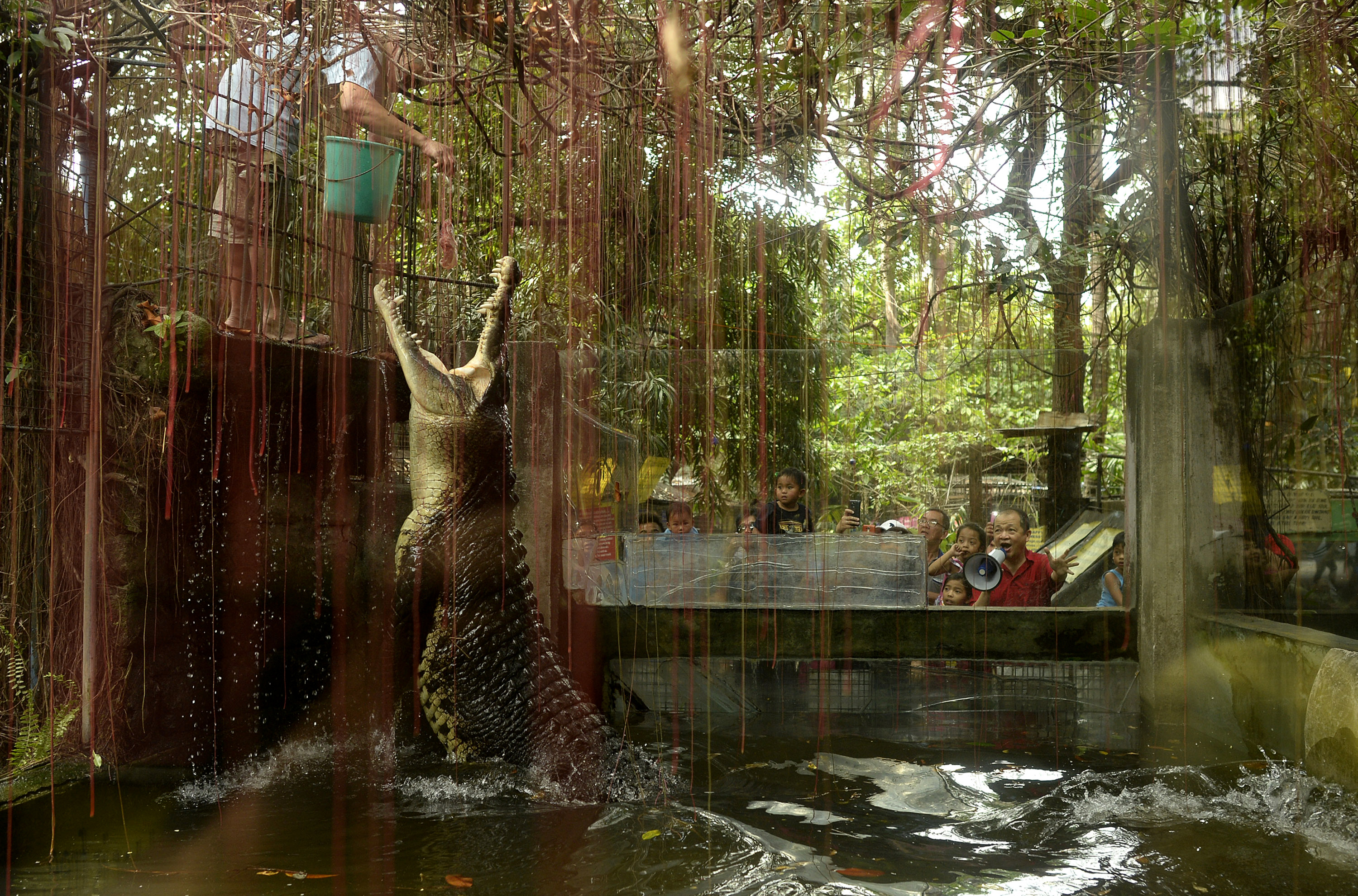 A worker feeds a crocodile named Shaquille at an enclosure at the Malabon Zoo in Manila, Philippines, on March 3, 2016.