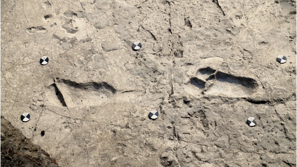 What These 3.66 Million-Year-Old Footprints Tell Us About Our Human Ancestors