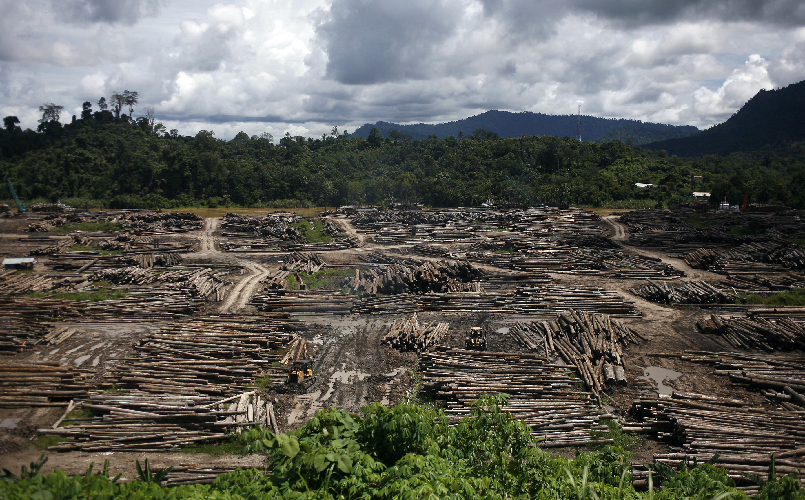 A view of a timber depot in the upper Baram region of Malaysia's eastern Sarawak state on July 20, 2010