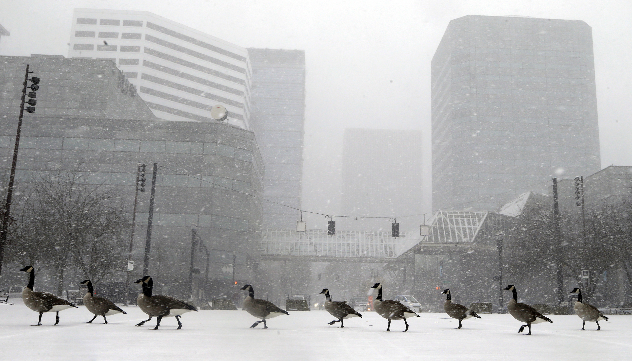 Geese walk along the snow covered waterfront park through heavy snowfall as the first winter storm of the season hits the area in Portland, Ore. on Dec. 8, 2016.
