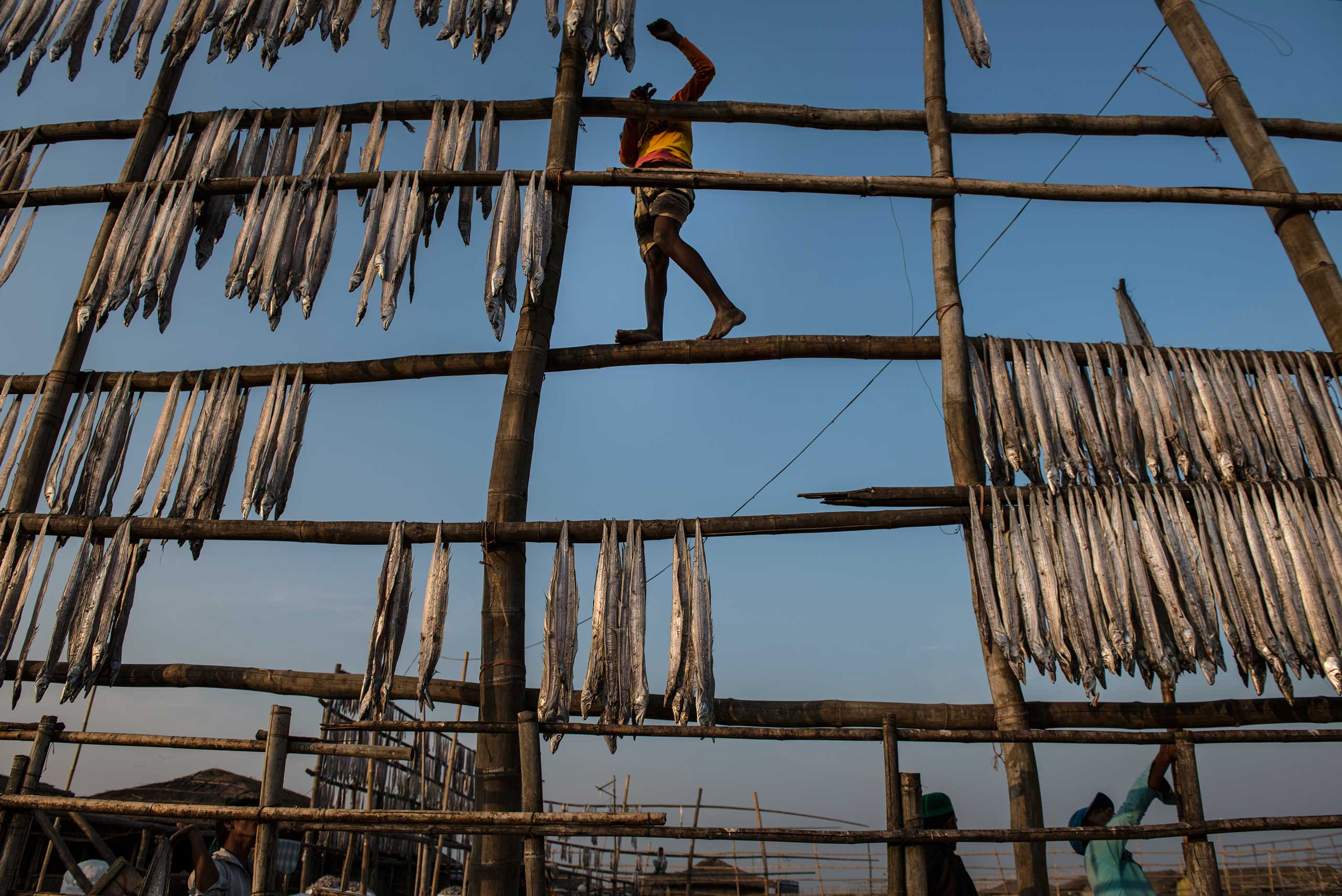 Rohingya work alongside Bangladeshis in the dried fish market along the sea in Naziratek, outside of Cox's Bazaar, in Bangladesh. The Rohingya are systematically marginalized, and forced into formal and makeshift camps across Bangladesh and Myanmar.