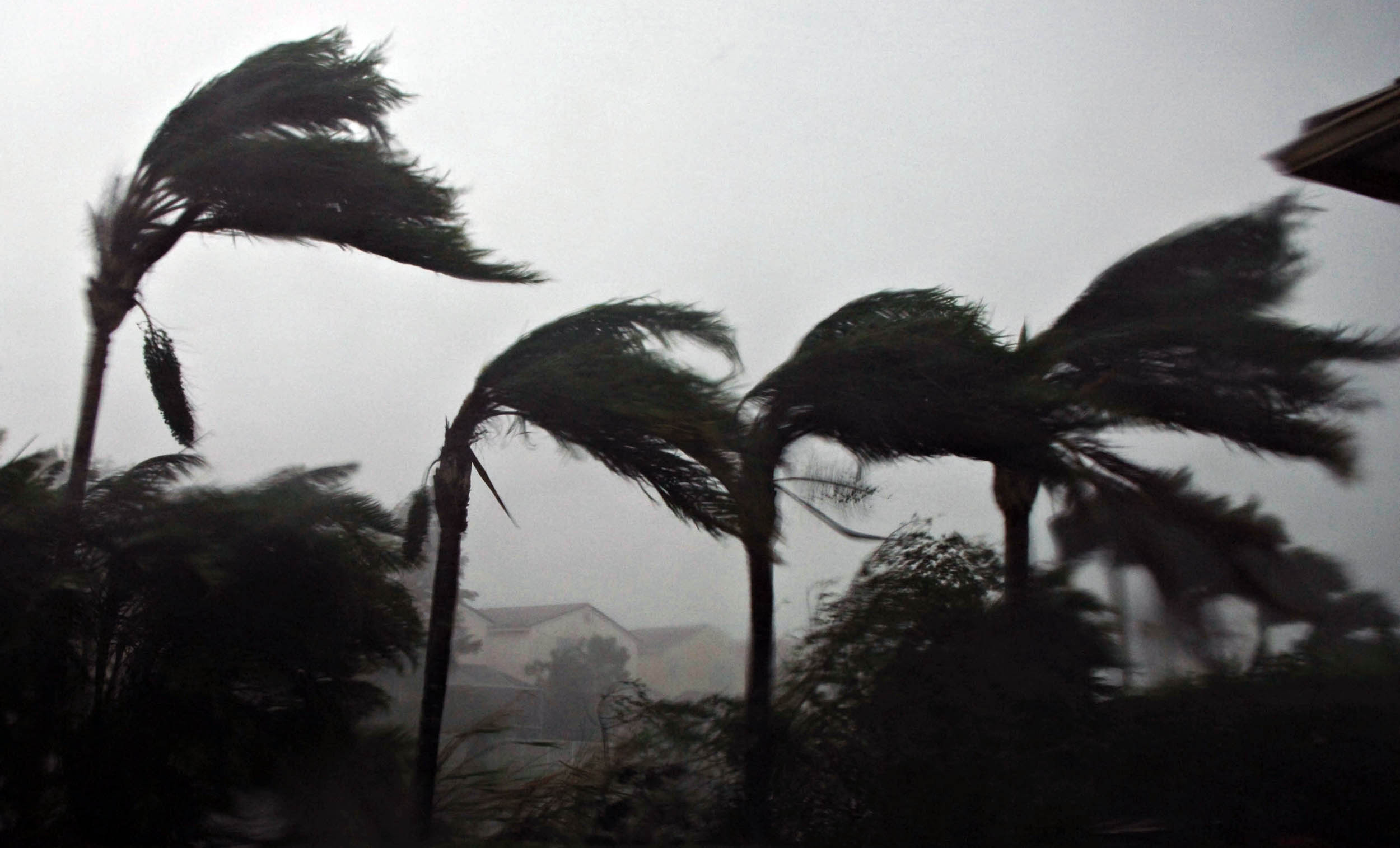 Palm trees bend in the winds of Hurricane Wilma as the storm makes landfall in Plantation, Florida on Oct. 24, 2005. Wilma was the last major hurricane to make landfall in the U.S.