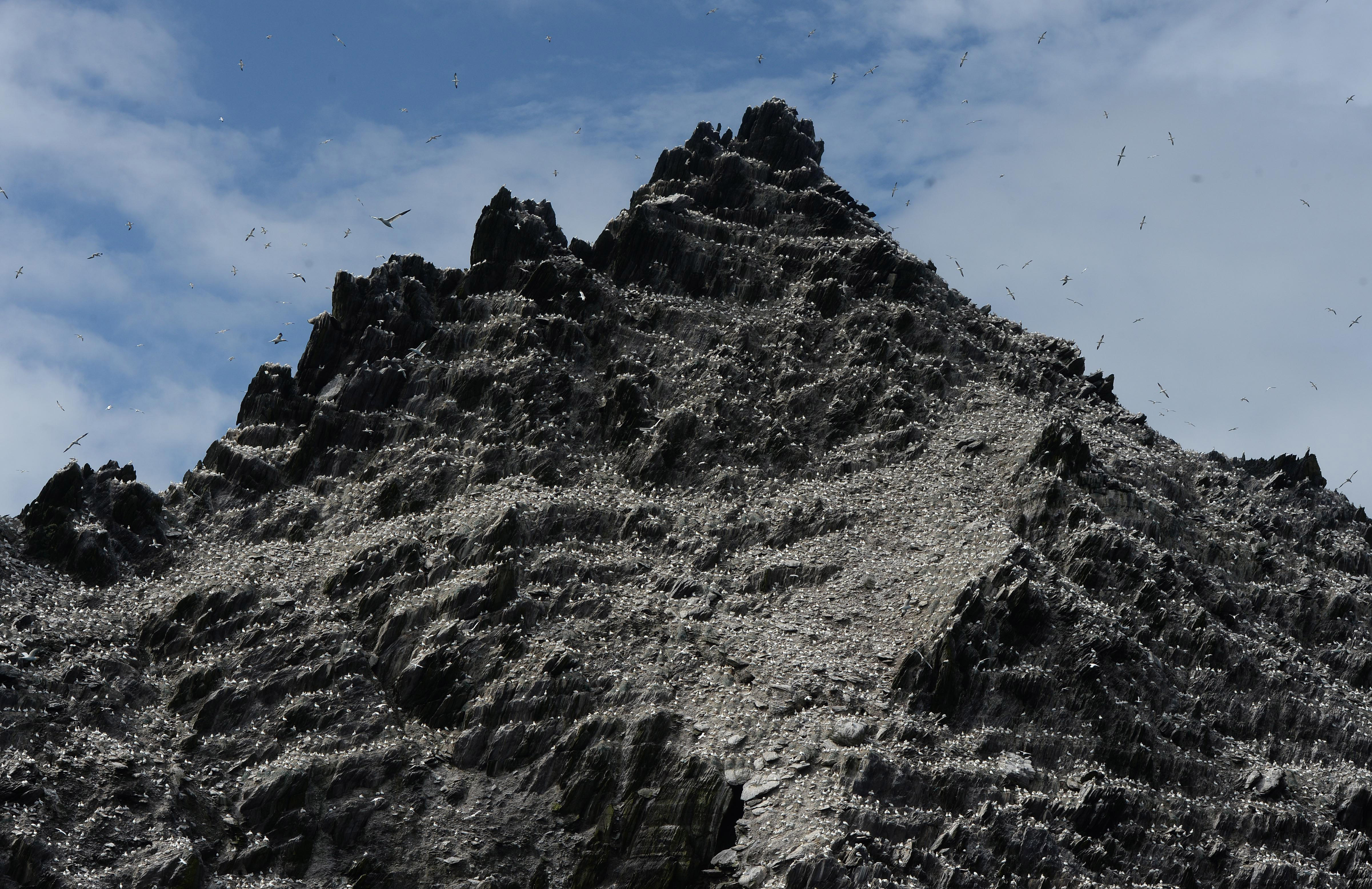 Birds on Skellig Michael island as Star Wars Episode VII directed by JJ Abrams begins filming, July 28, 2014 in Skellig island, Ireland.