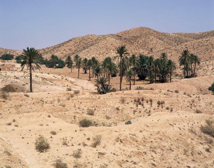 Oasis near Matmata, Sahara Desert, Tunisia.