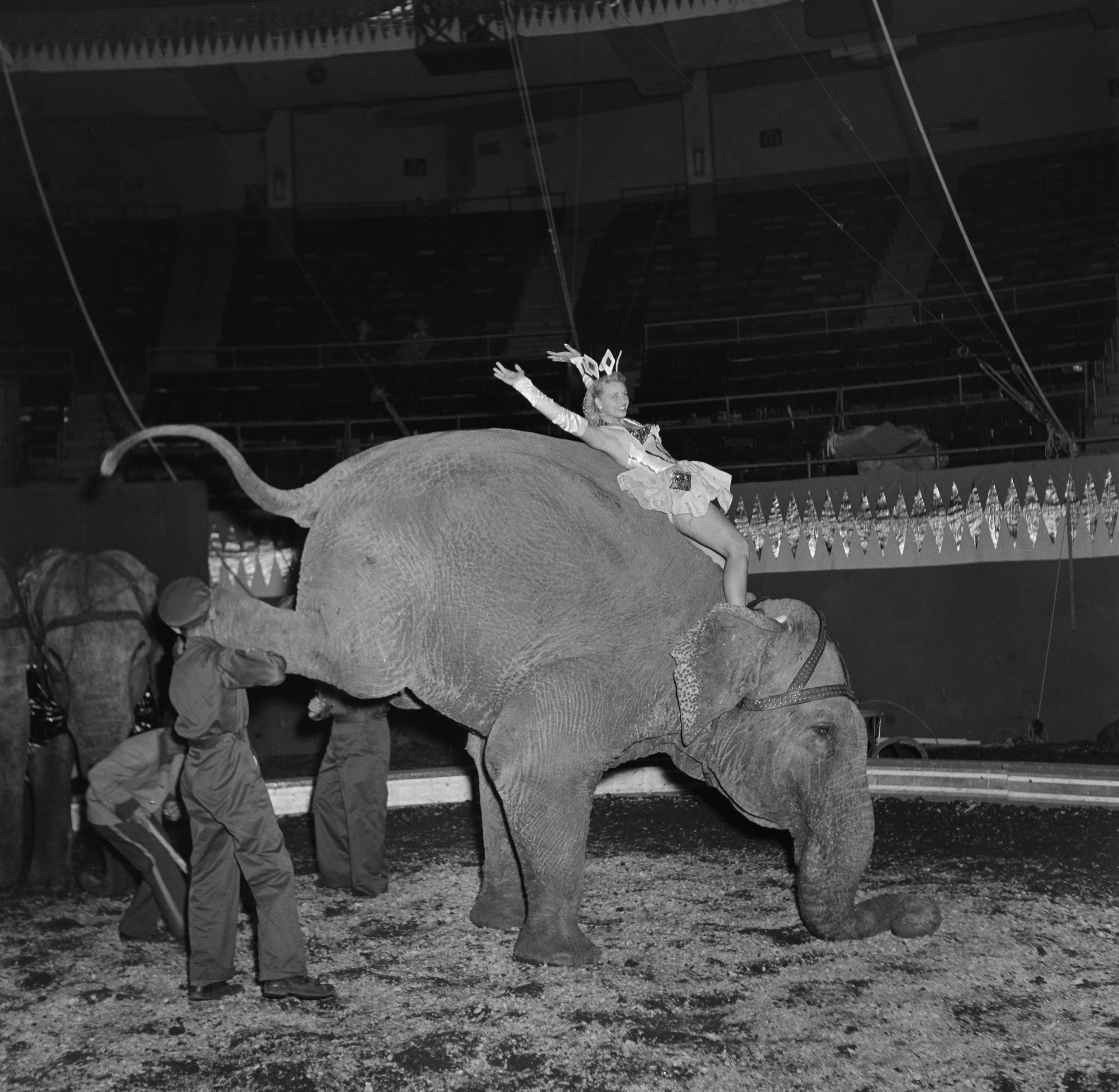 A performer rides an elephant to entertain the audience during Ringling Bros. and Barnum & Bailey Circus in New York on Apr. 7, 1948.