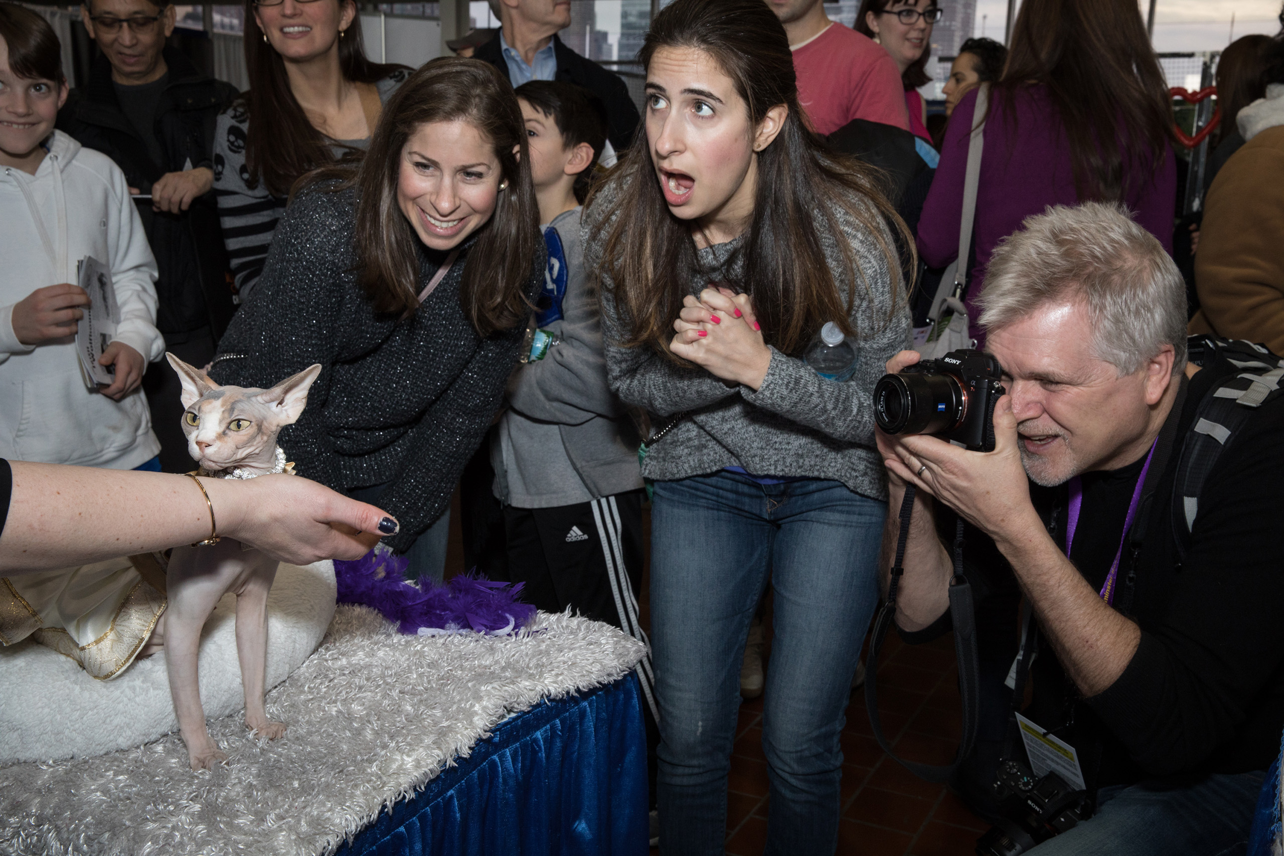 Attendees react to Chance, a Sphynx at the American Kennel Club's Meet the Breeds event on Feb. 11, 2017.