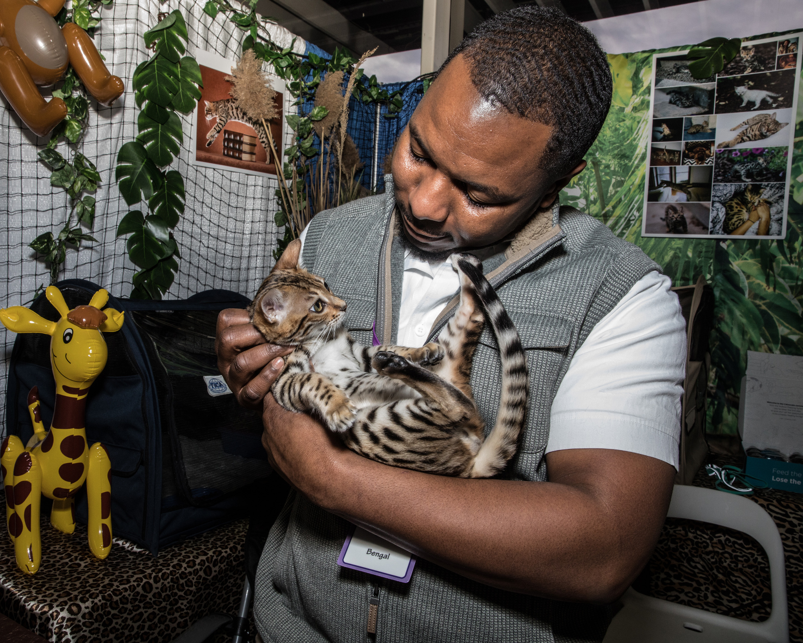 A Bengal kitten held by owner Anthony Hutcherson from Maryland, at the American Kennel Club's Meet the Breeds event on Feb. 11, 2017.