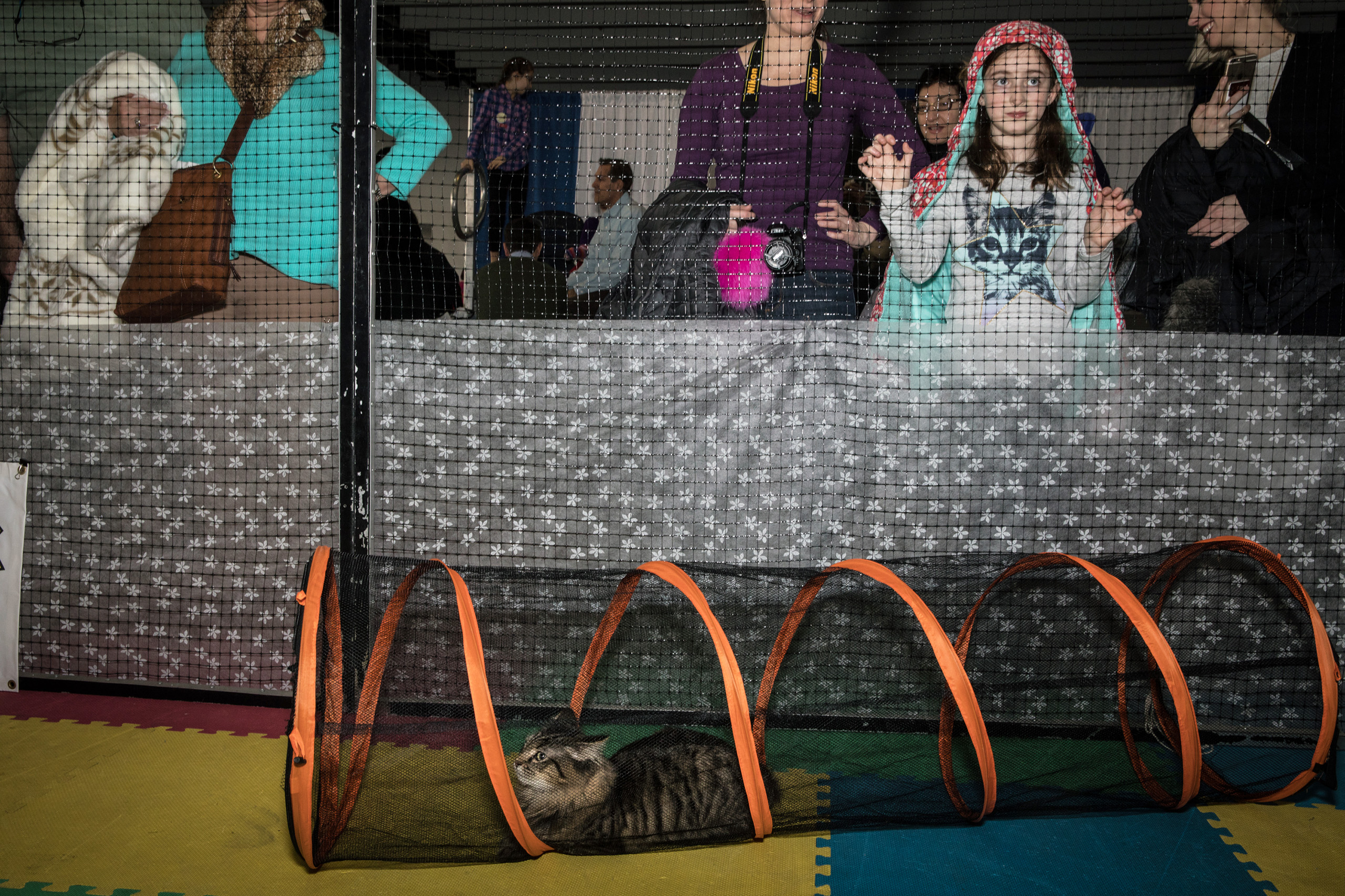 The feline agility course at the American Kennel Club's Meet the Breeds event on Feb. 11, 2017.