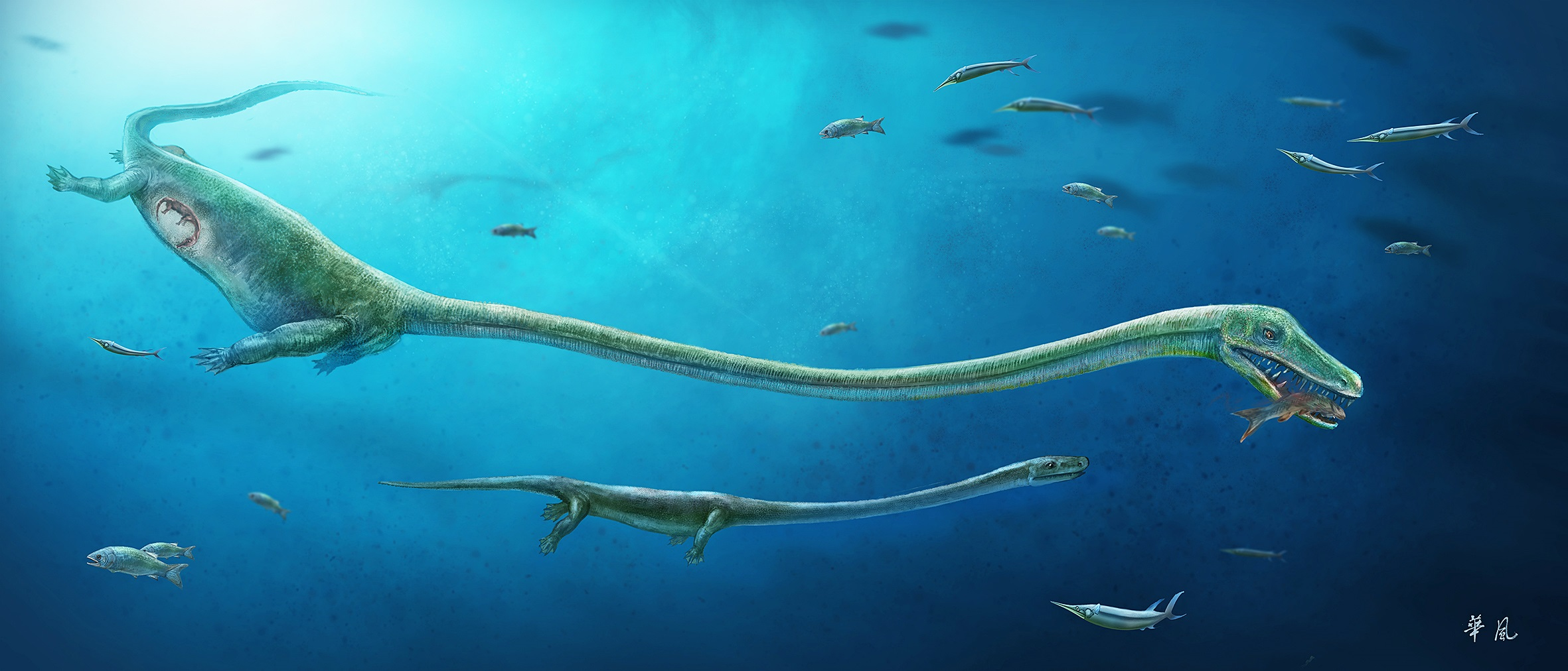 An artist's rendition of a pregnant dinocephalosaurus biting a fish