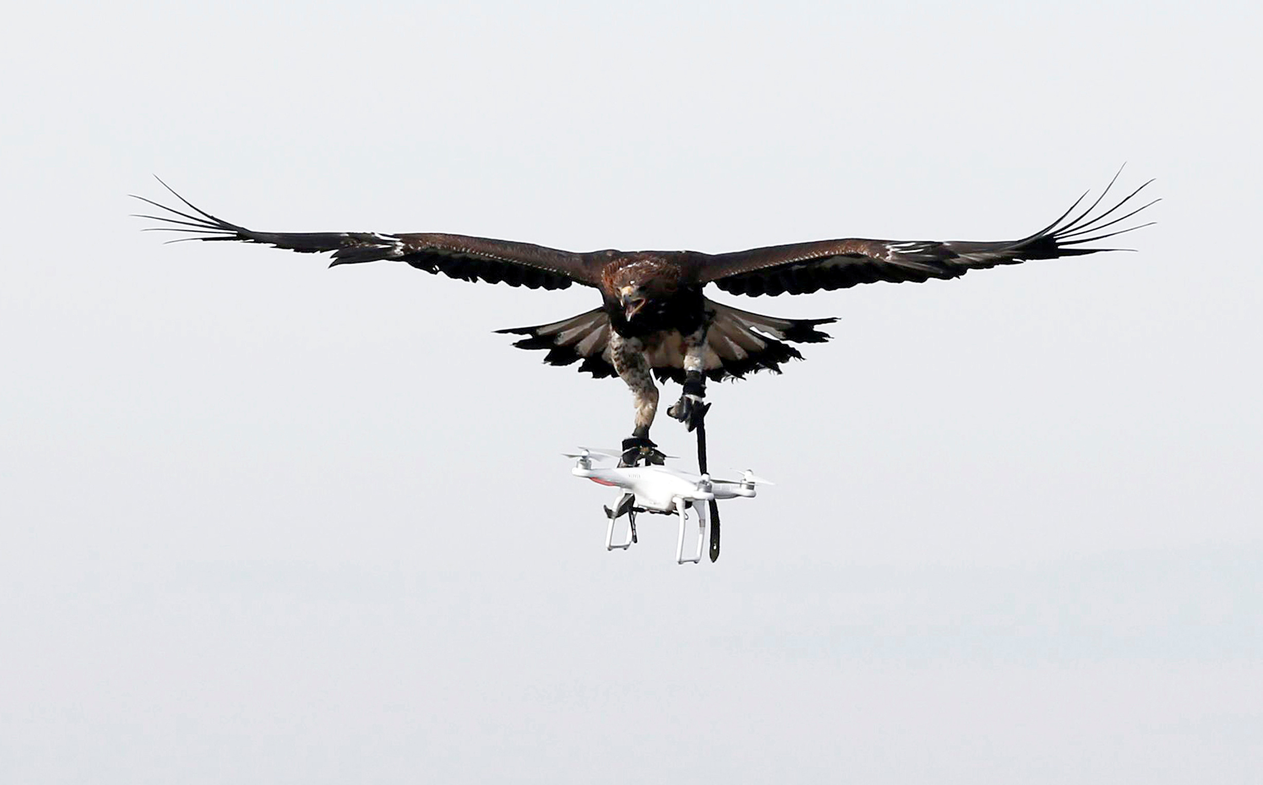 A golden eagle carries a flying drone away during a military training exercise at Mont-de-Marsan French Air Force base in Southwestern France on Feb. 10, 2017.